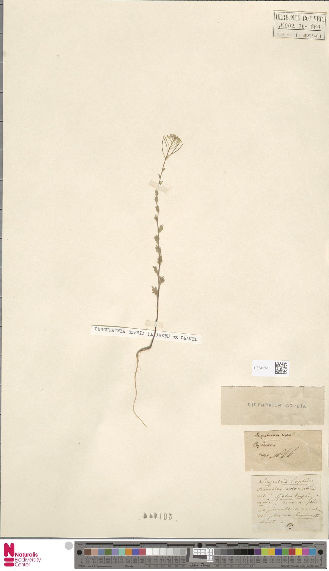 L.3241851   Descurainia sophia (L.) Webb ex Prantl