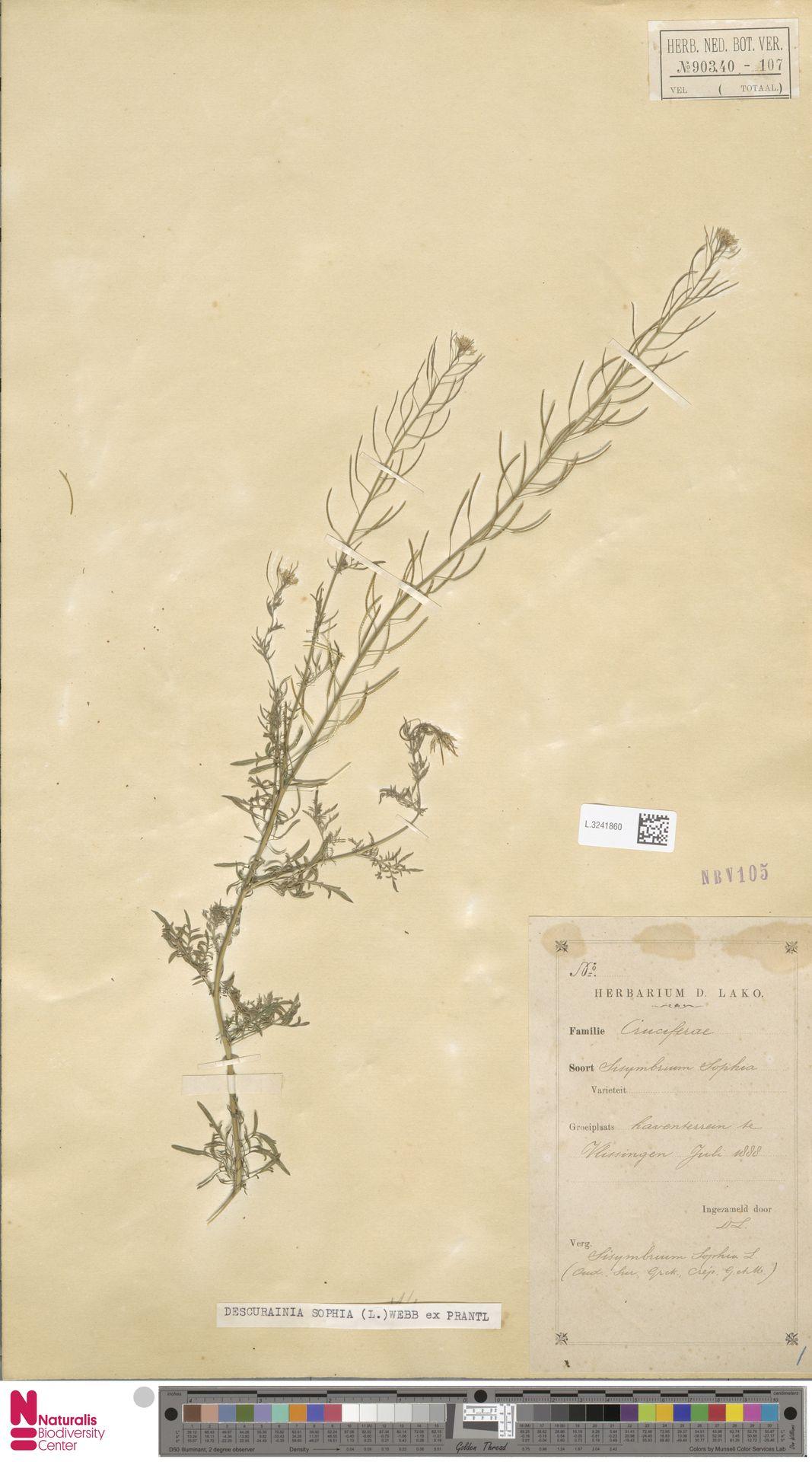 L.3241860 | Descurainia sophia (L.) Webb ex Prantl