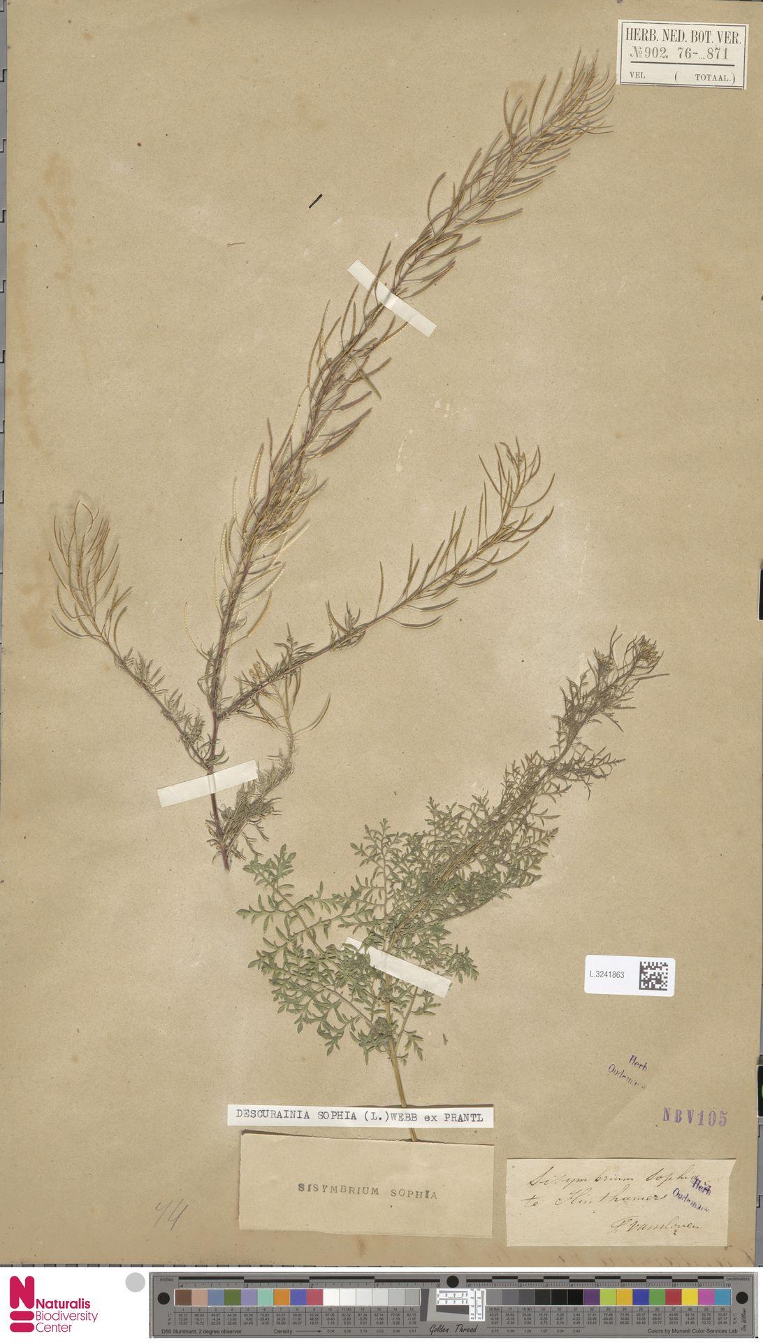 L.3241863   Descurainia sophia (L.) Webb ex Prantl