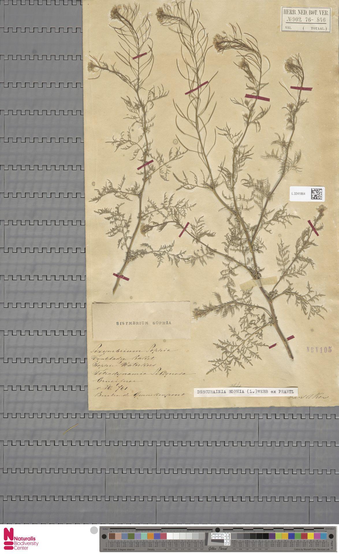 L.3241864   Descurainia sophia (L.) Webb ex Prantl