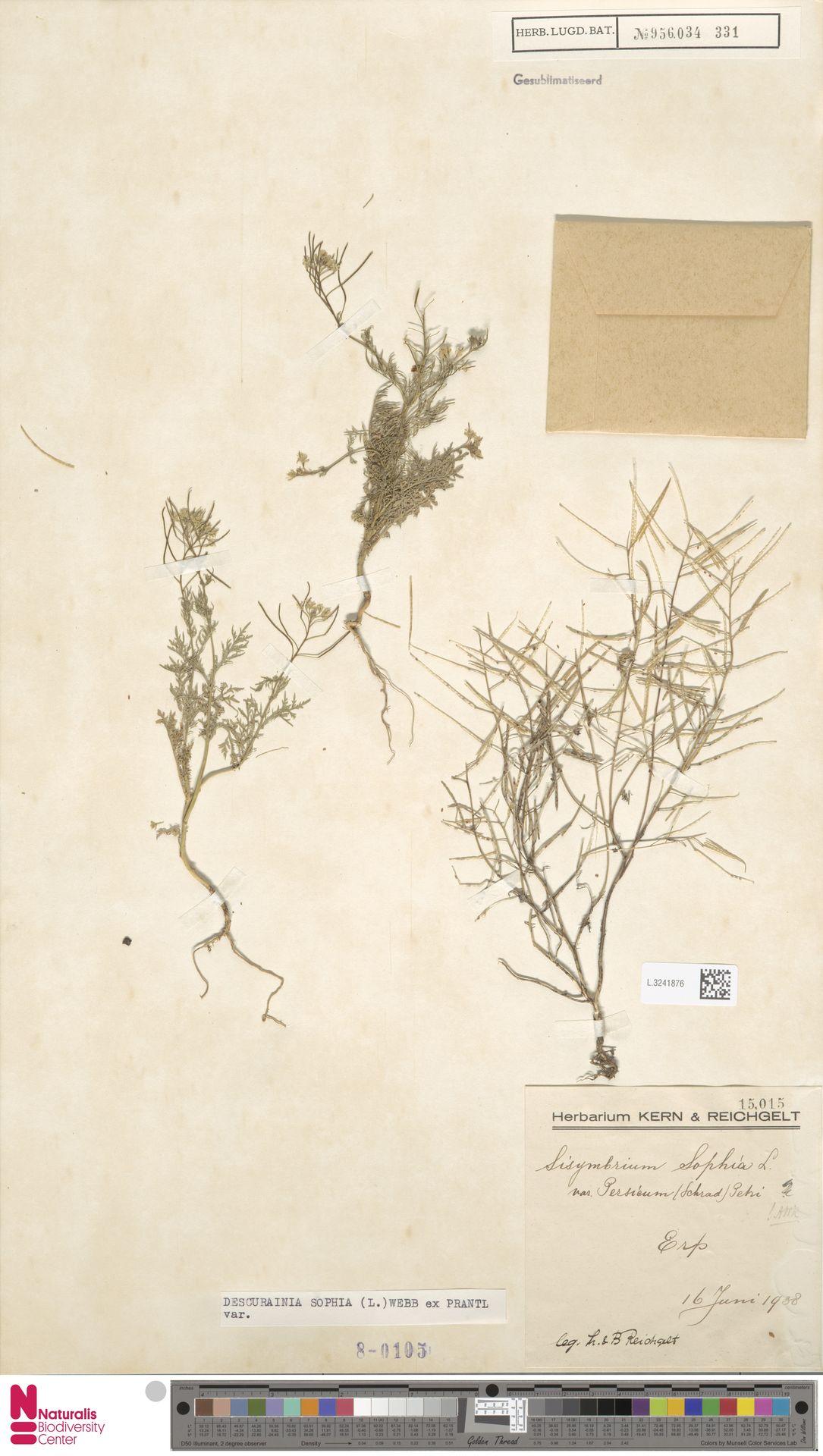 L.3241876 | Descurainia sophia (L.) Webb ex Prantl