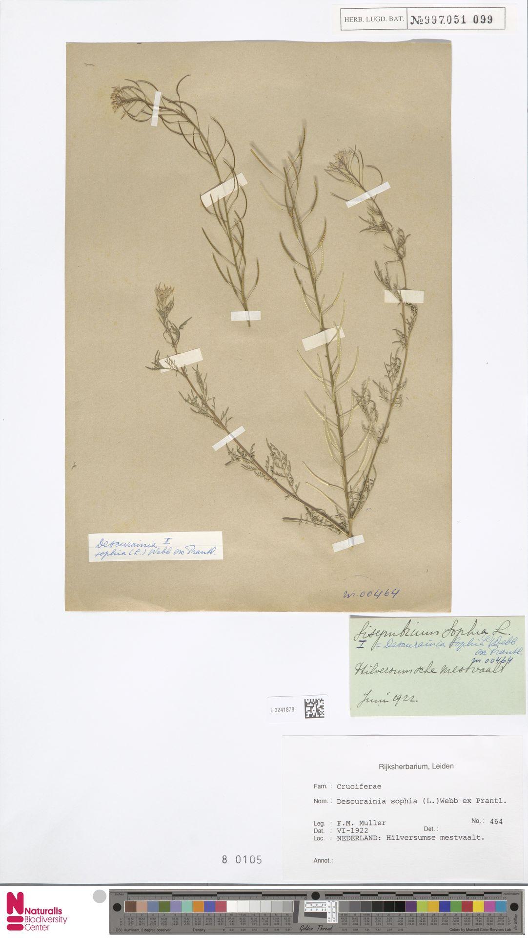 L.3241878 | Descurainia sophia (L.) Webb ex Prantl
