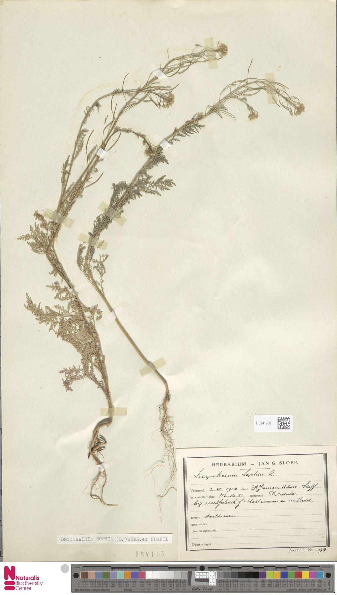L.3241900 | Descurainia sophia (L.) Webb ex Prantl