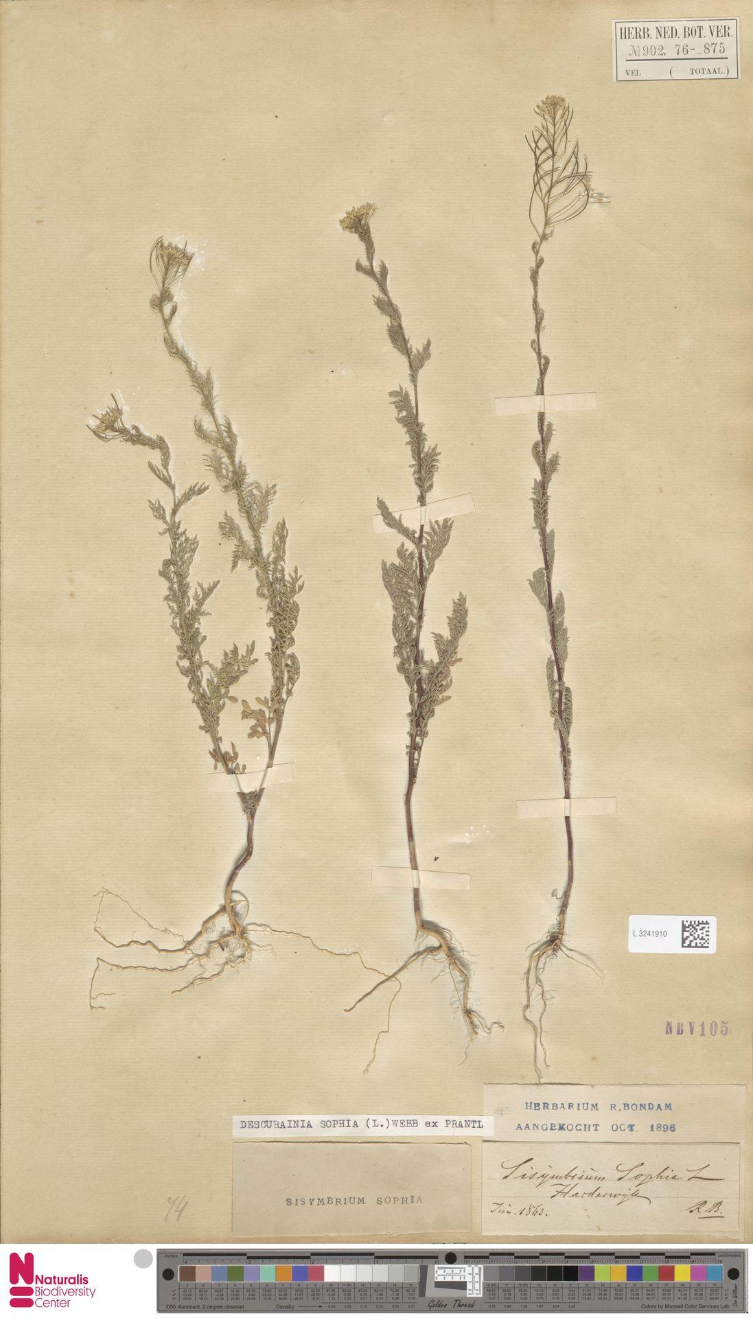 L.3241910   Descurainia sophia (L.) Webb ex Prantl