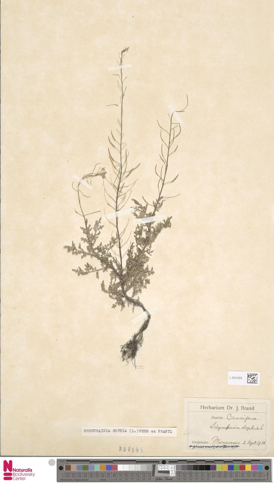 L.3241928   Descurainia sophia (L.) Webb ex Prantl