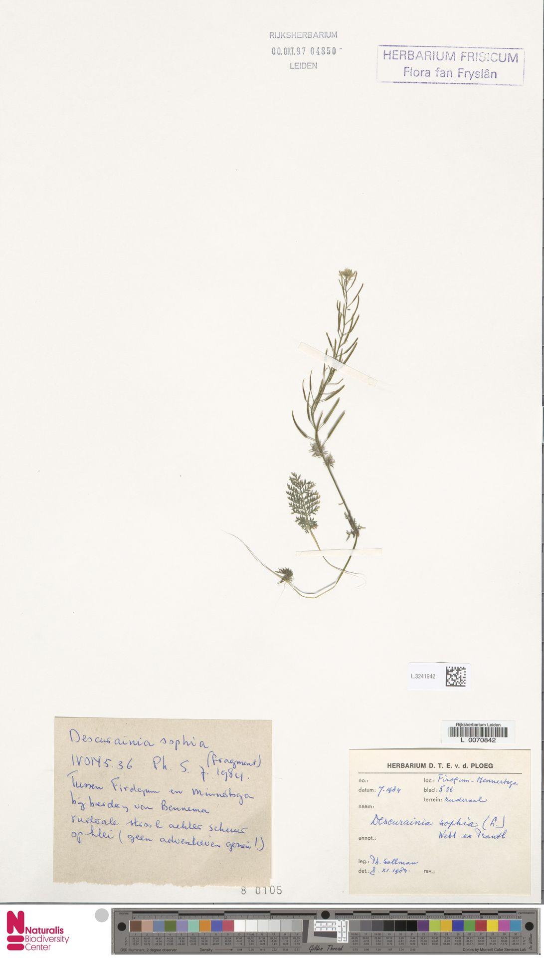 L.3241942 | Descurainia sophia (L.) Webb ex Prantl