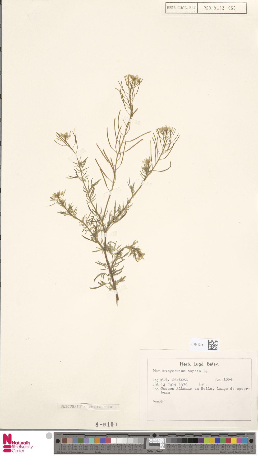 L.3241945 | Descurainia sophia (L.) Webb ex Prantl