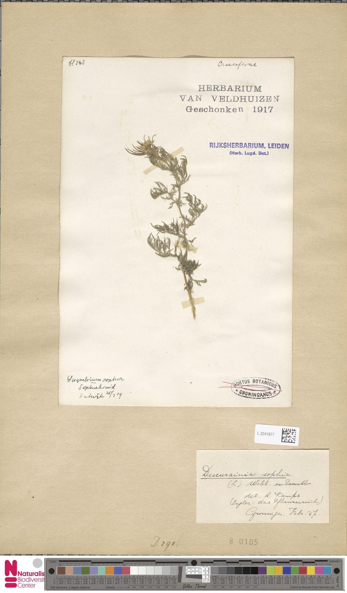 L.3241977   Descurainia sophia (L.) Webb ex Prantl