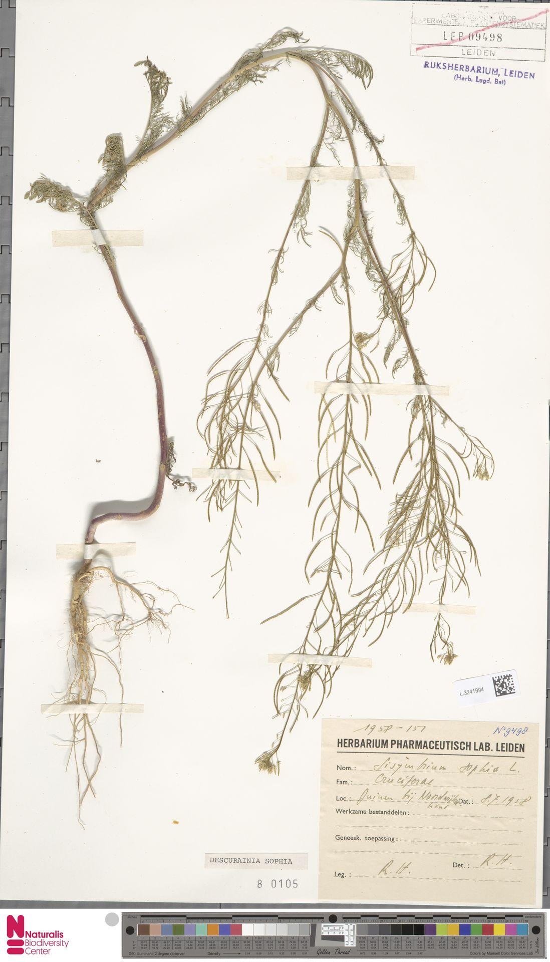 L.3241994   Descurainia sophia (L.) Webb ex Prantl