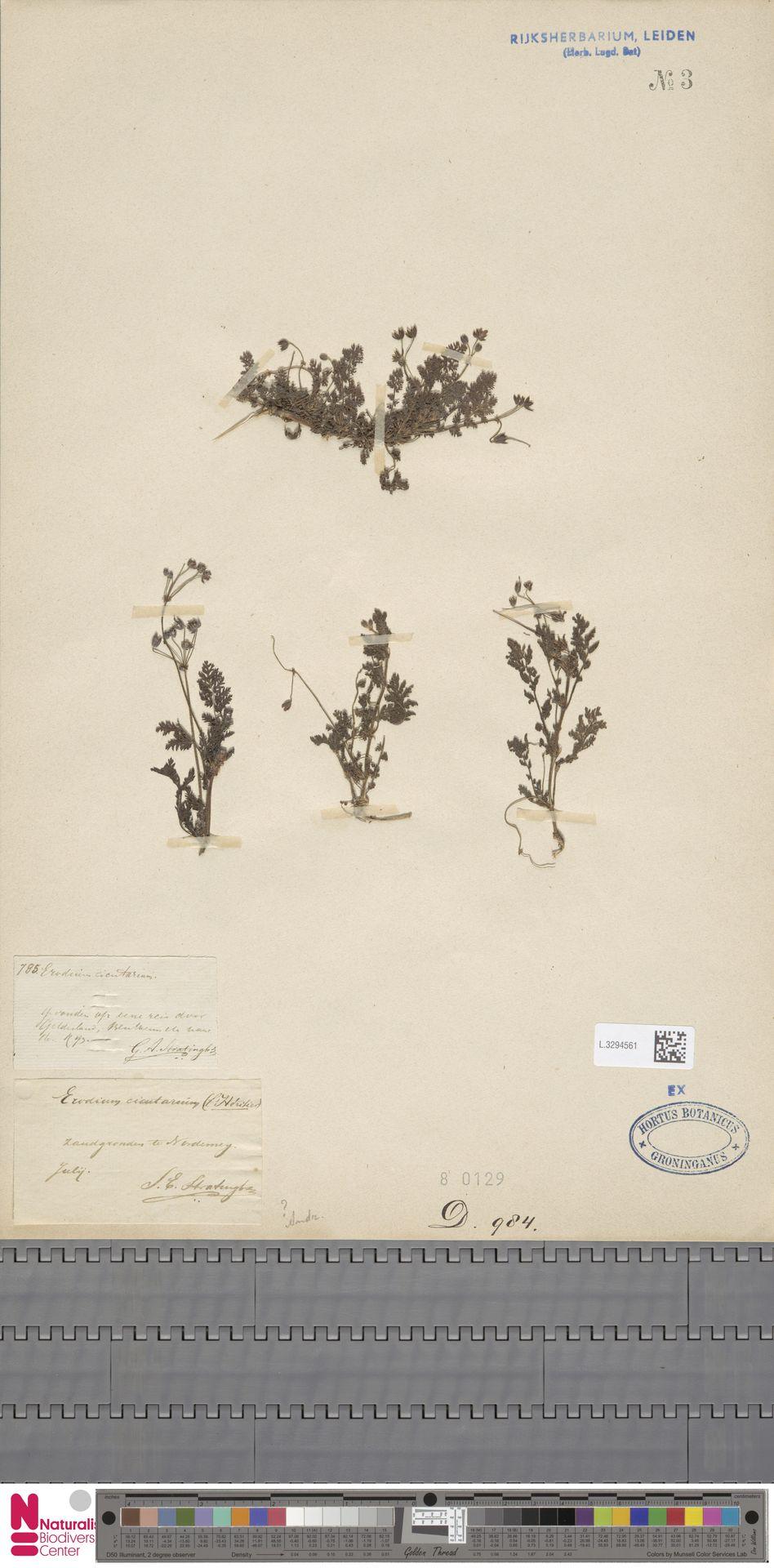 L.3294561 | Erodium cicutarium (L.) L'Hér.