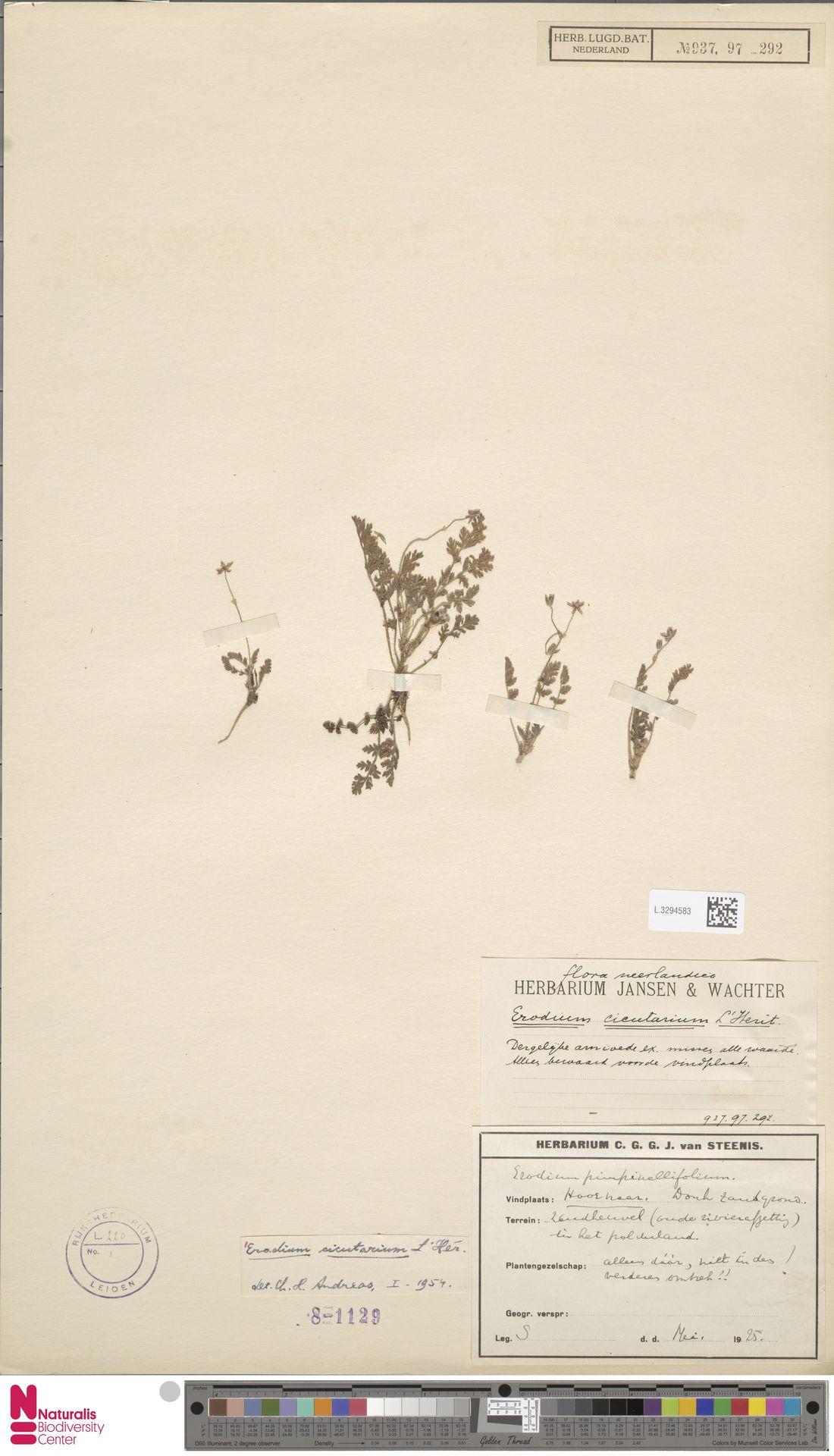 L.3294583 | Erodium cicutarium (L.) L'Hér.