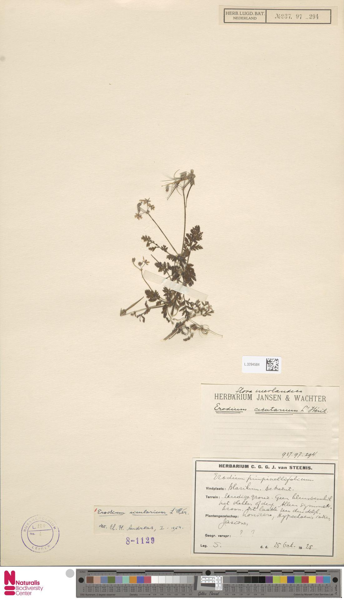 L.3294584 | Erodium cicutarium (L.) L'Hér.