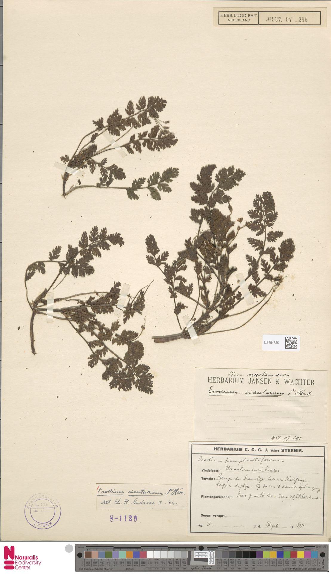 L.3294585   Erodium cicutarium (L.) L'Hér.