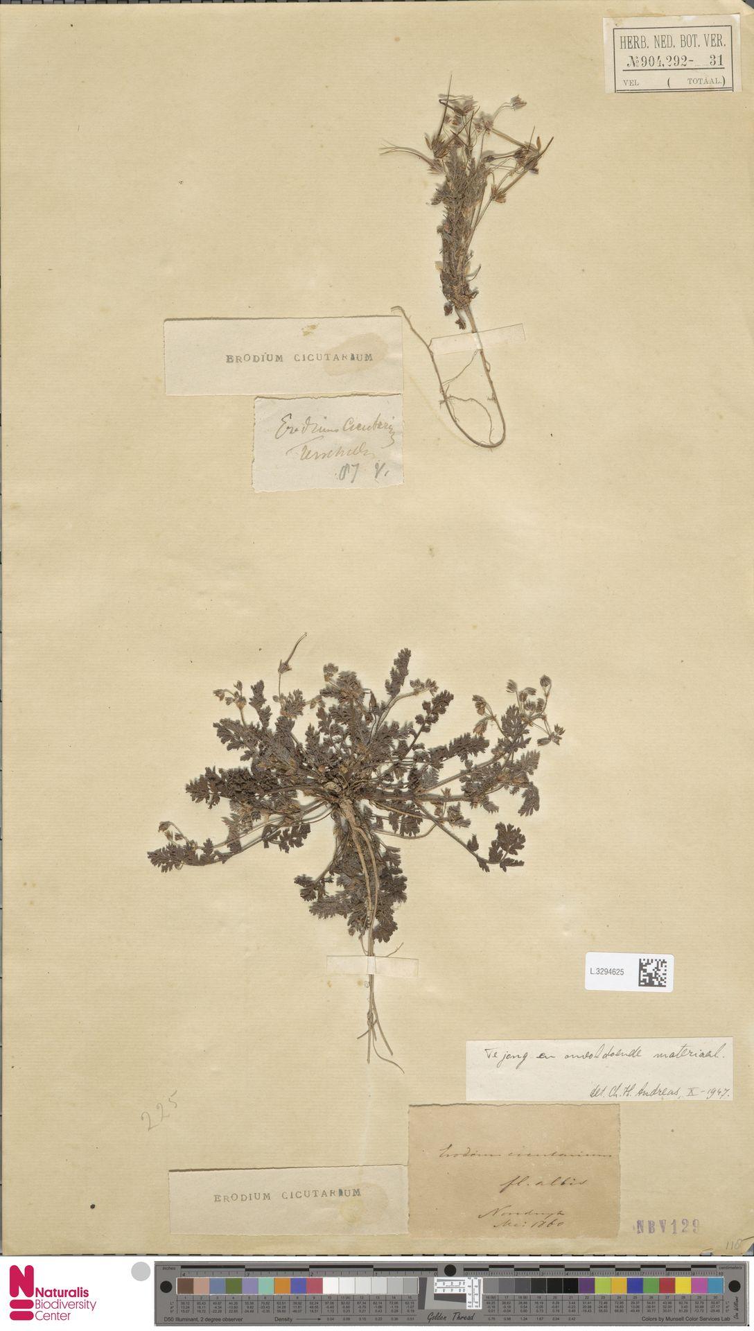L.3294625 | Erodium cicutarium (L.) L'Hér.