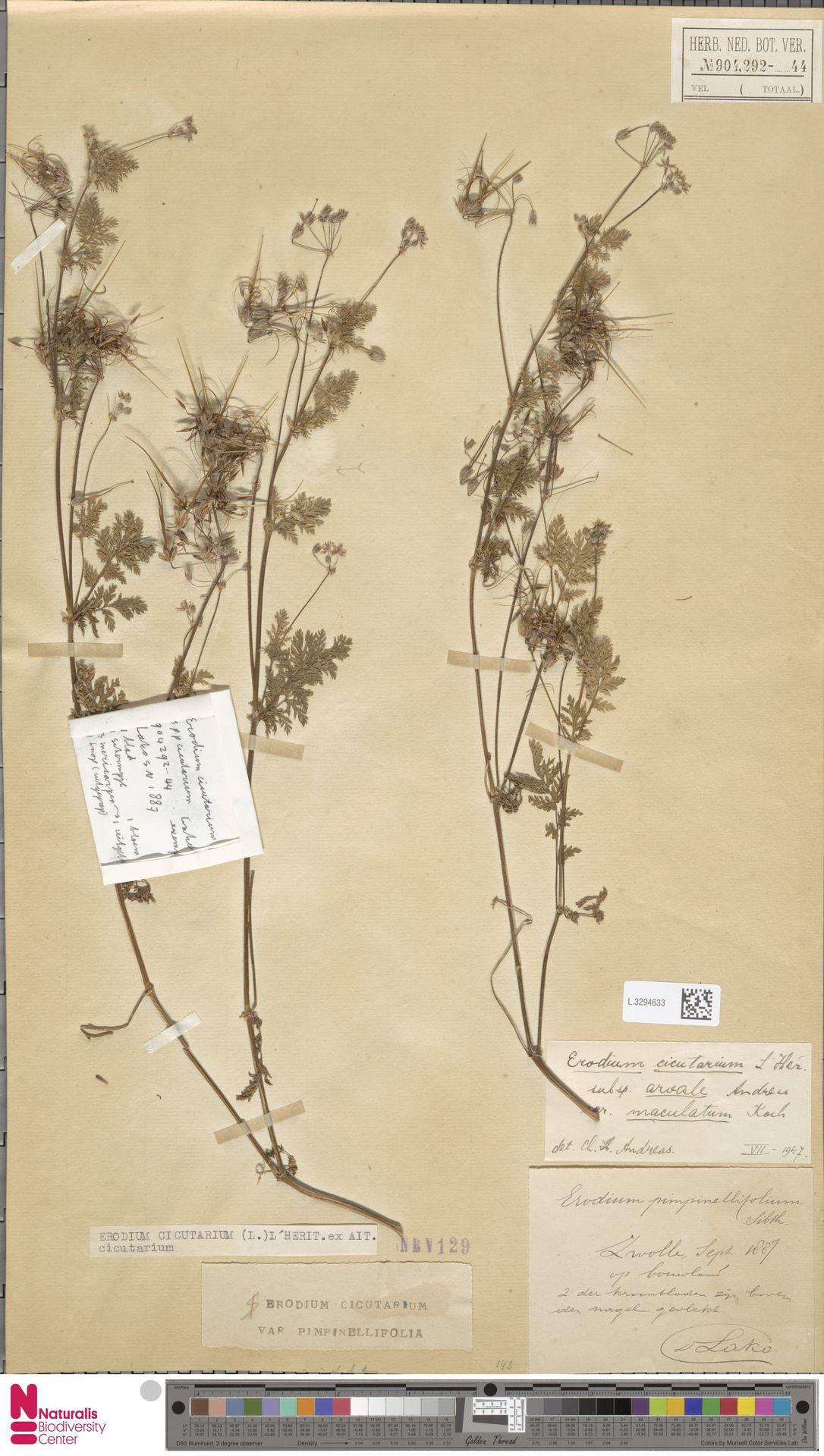 L.3294633 | Erodium cicutarium (L.) L'Hér.