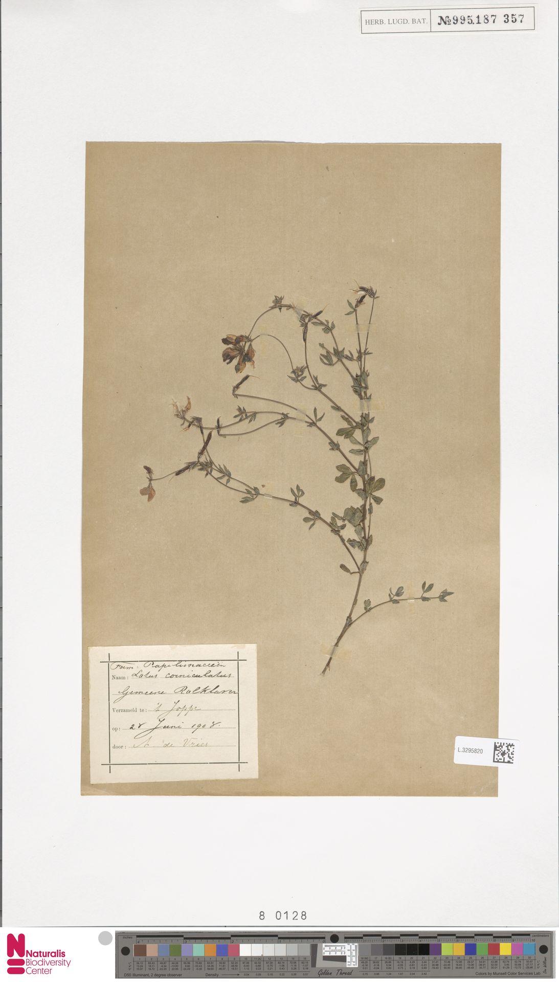 L.3295820 | Lotus corniculatus L.