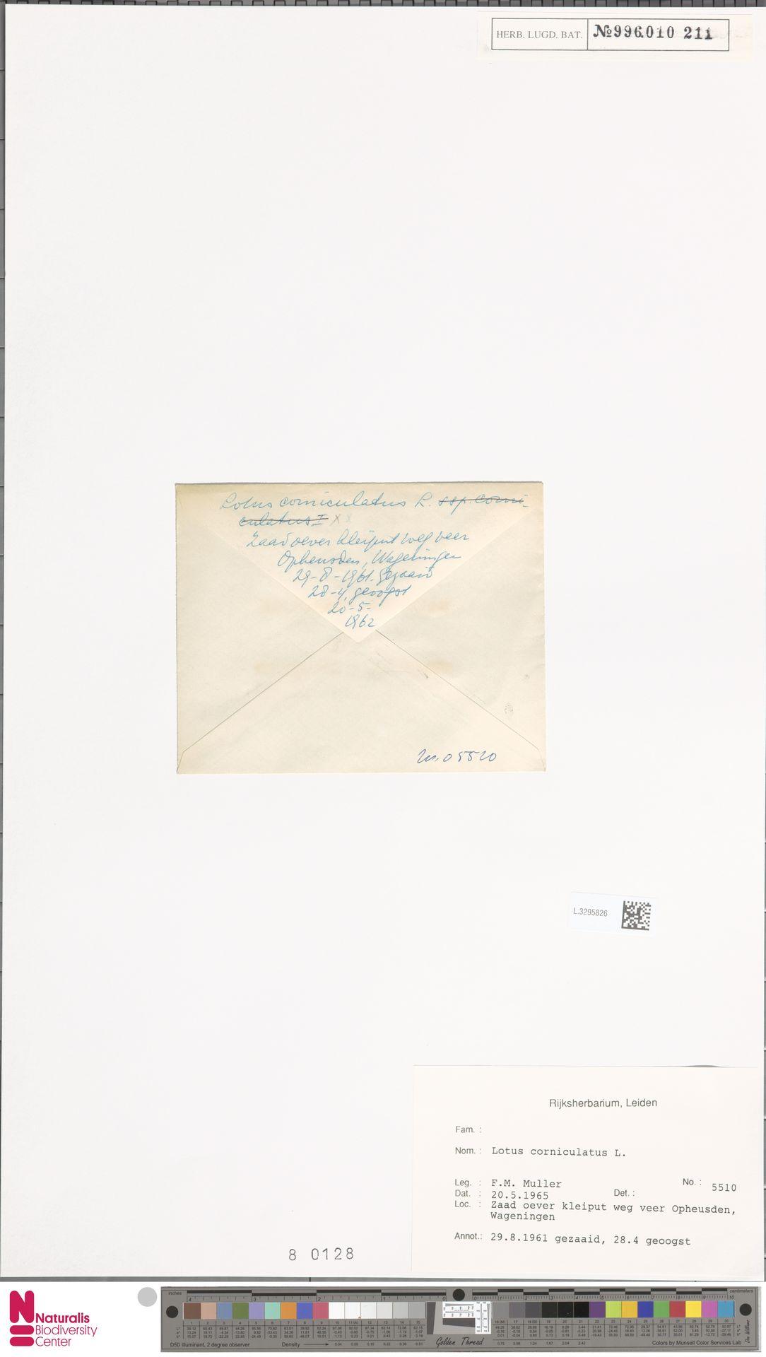 L.3295826 | Lotus corniculatus L.