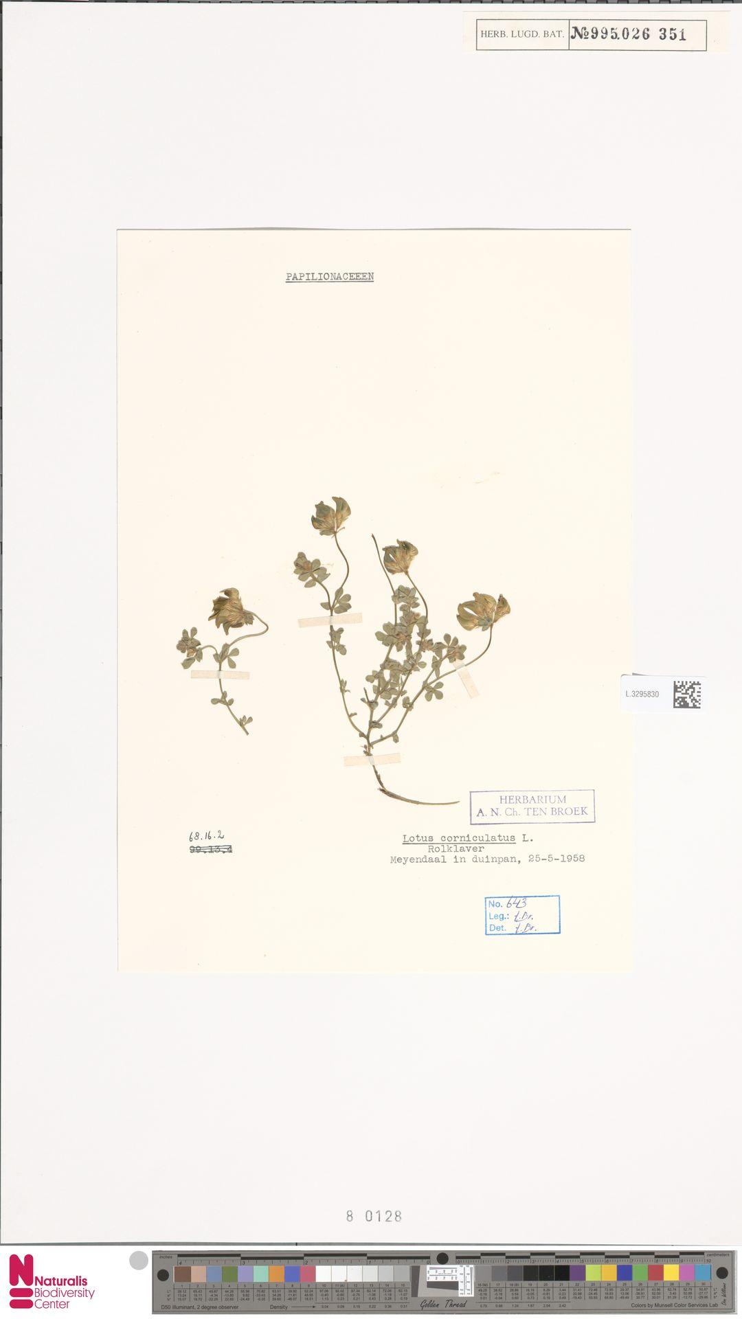 L.3295830 | Lotus corniculatus L.
