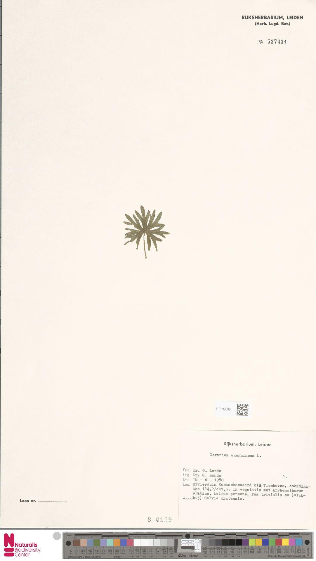 L.3299690 | Geranium sanguineum L.