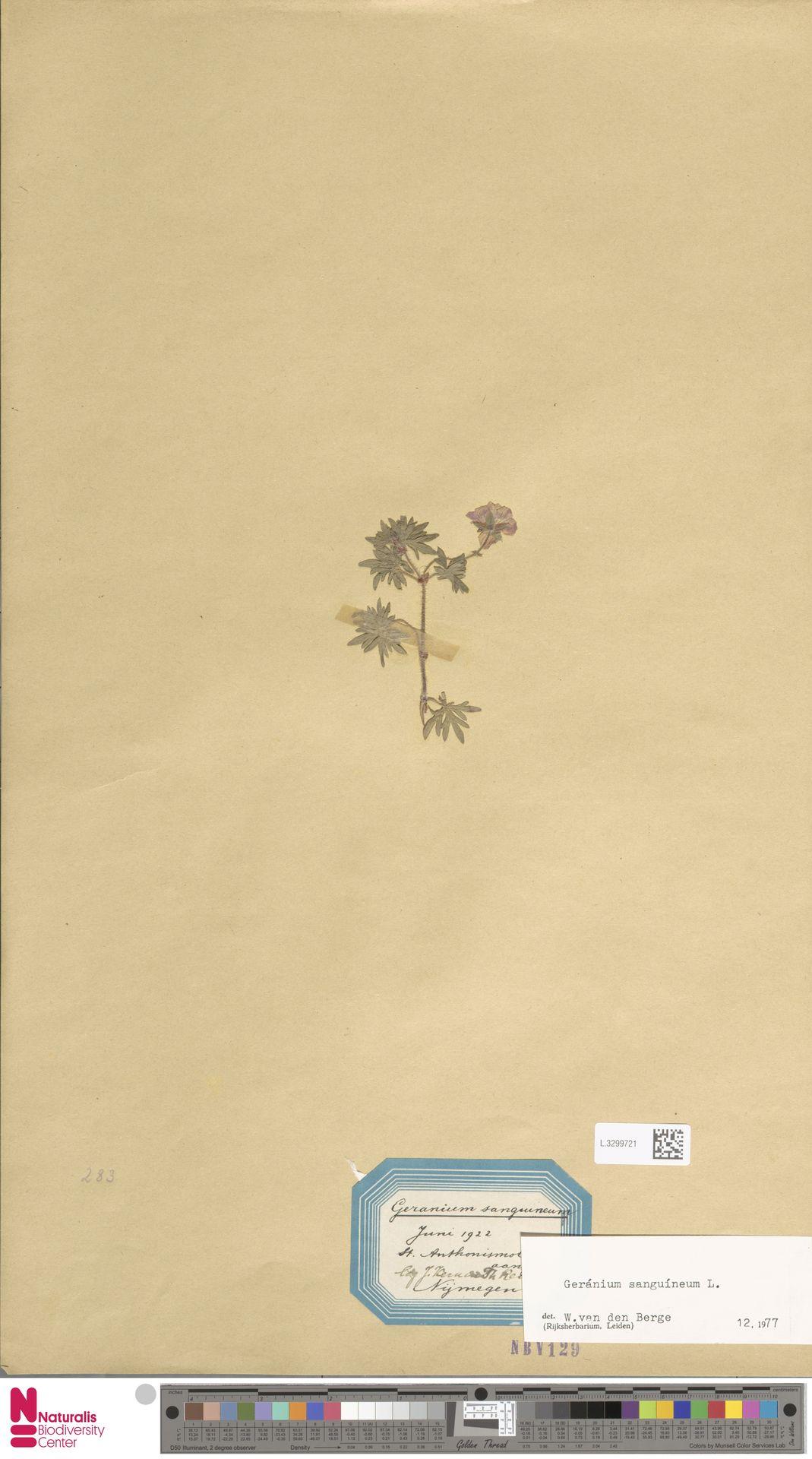 L.3299721 | Geranium sanguineum L.