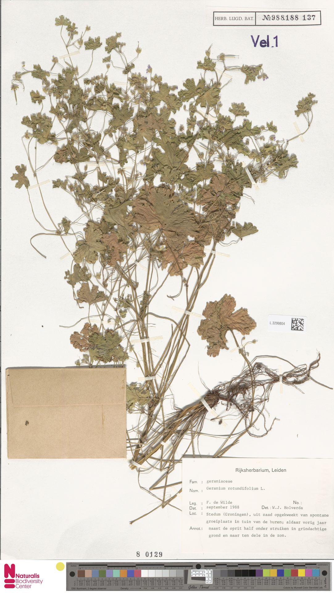 L.3299804 | Geranium rotundifolium L.