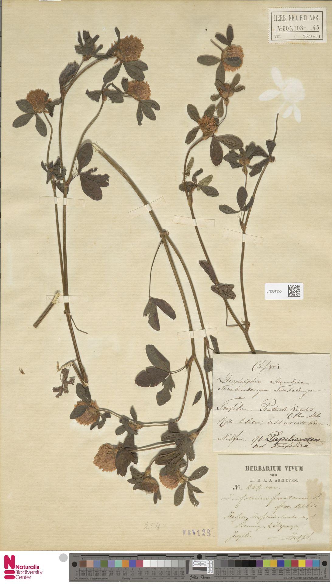 L.3301355 | Trifolium pratense L.