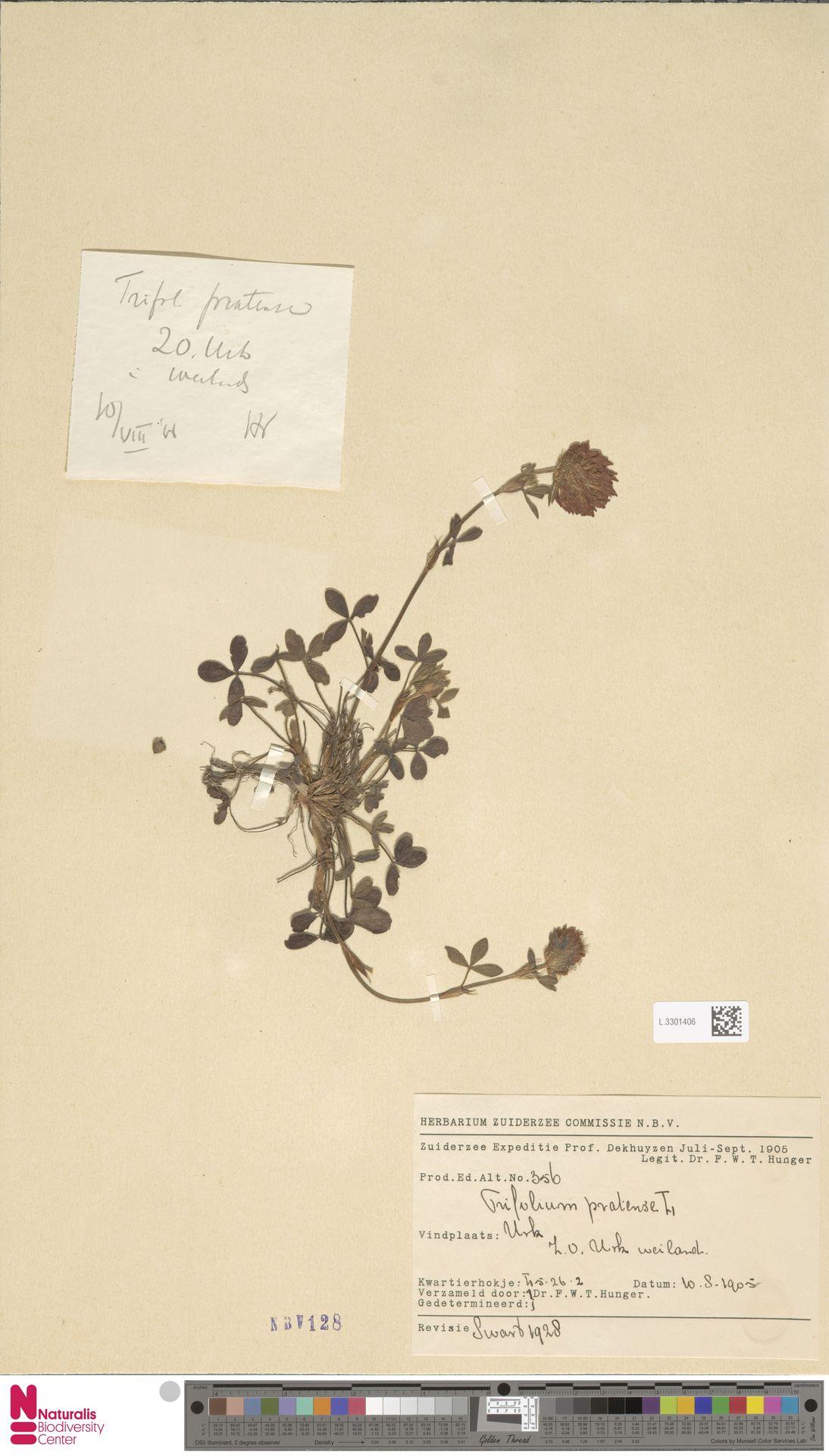L.3301406   Trifolium pratense L.