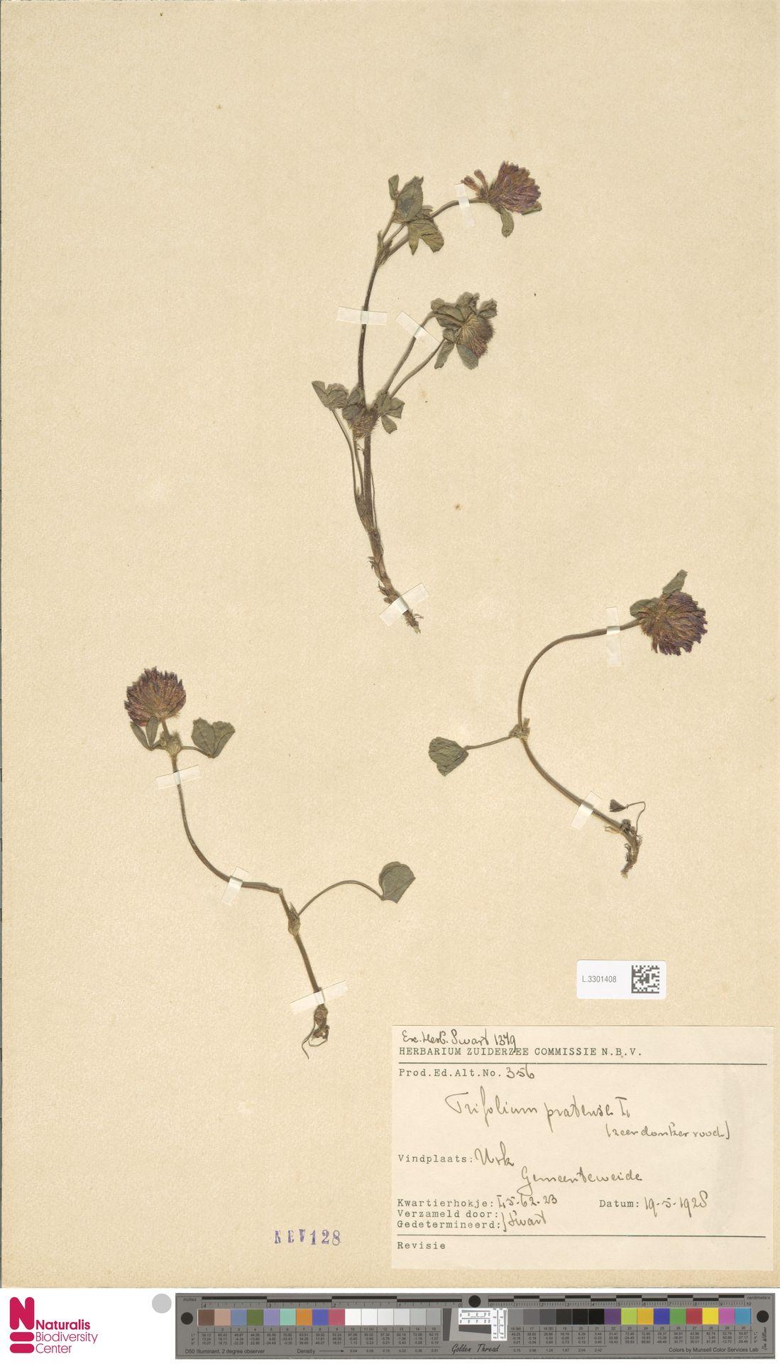 L.3301408   Trifolium pratense L.