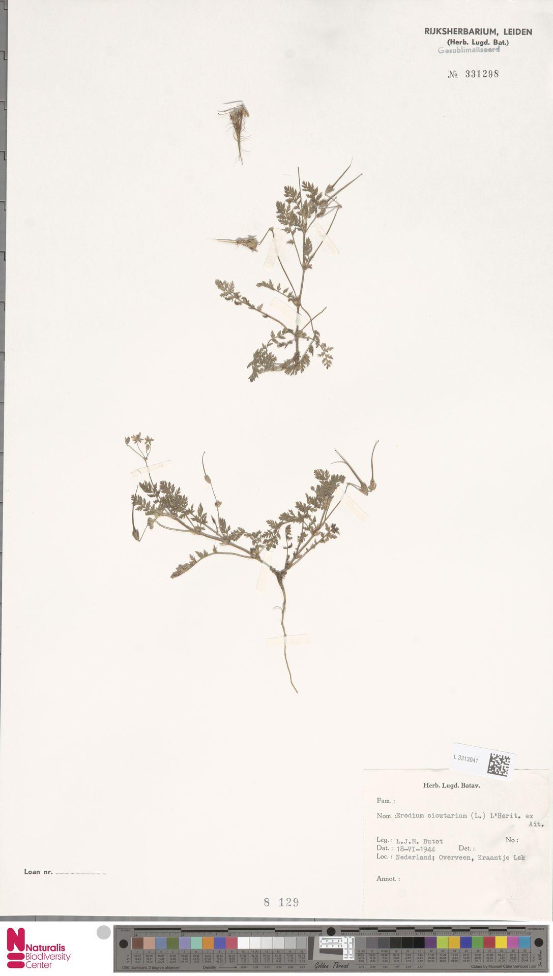 L.3313041 | Erodium cicutarium (L.) L'Hér.