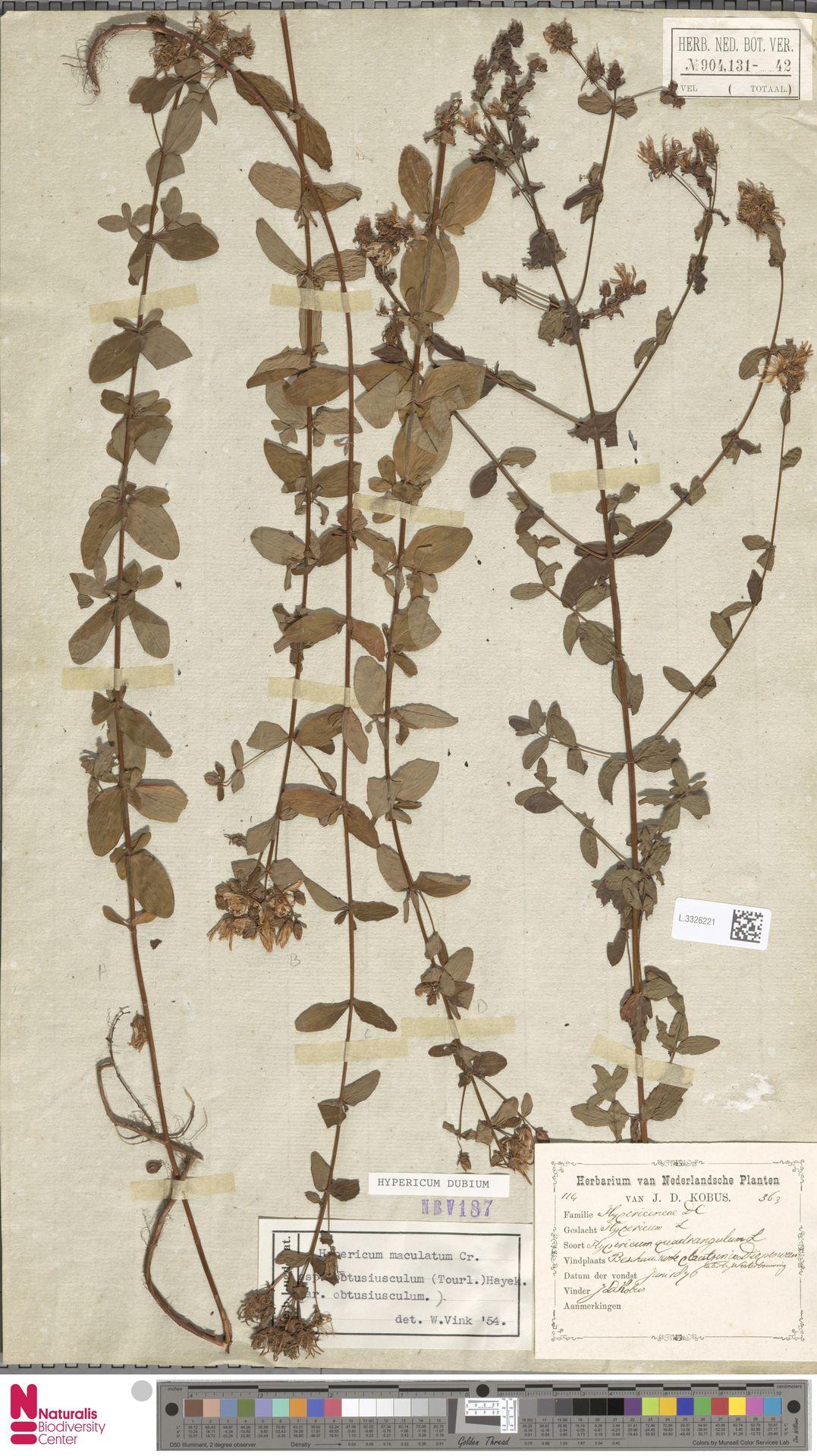 L.3326221 | Hypericum perforatum L.