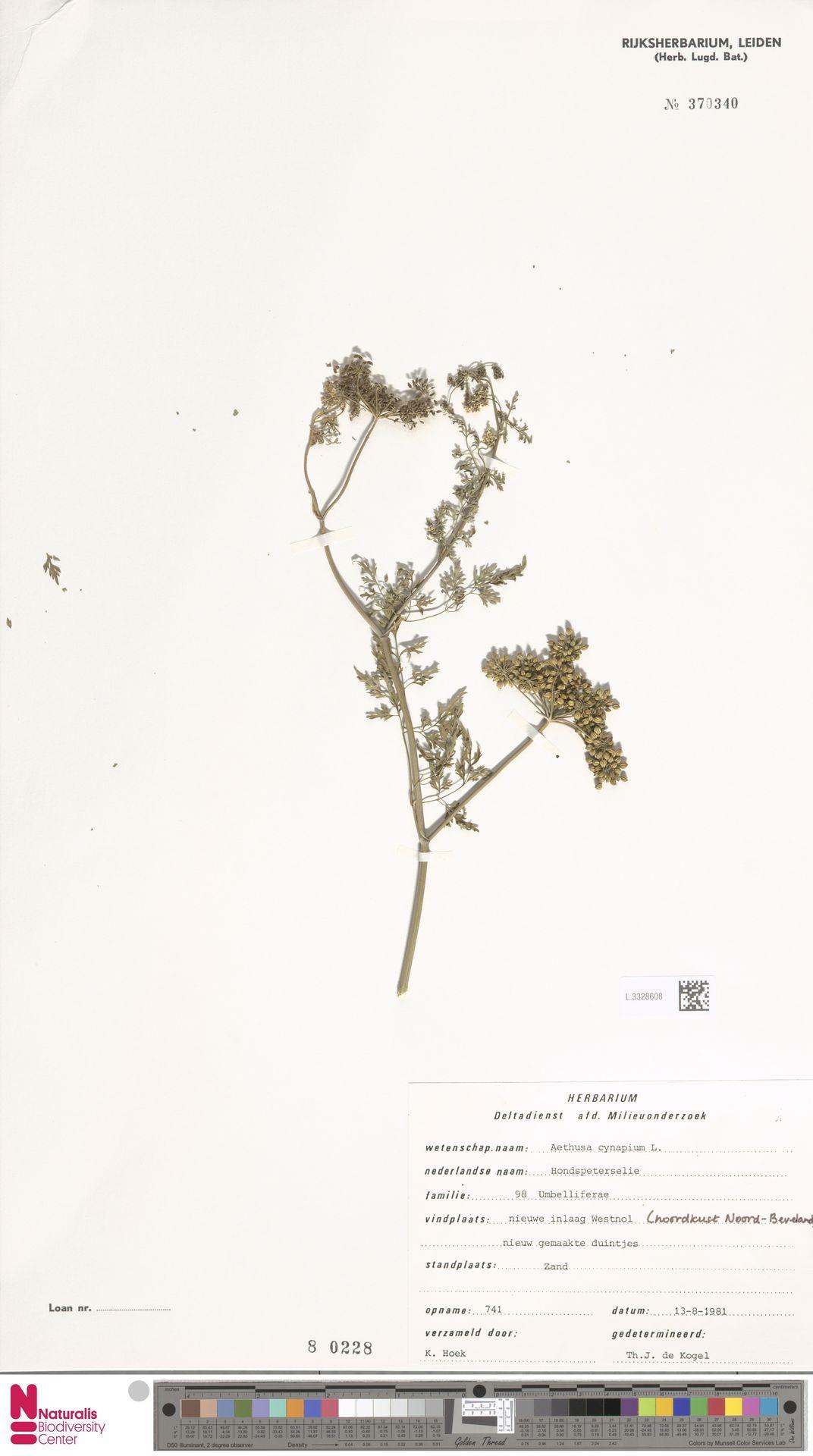 L.3328608 | Aethusa cynapium L.