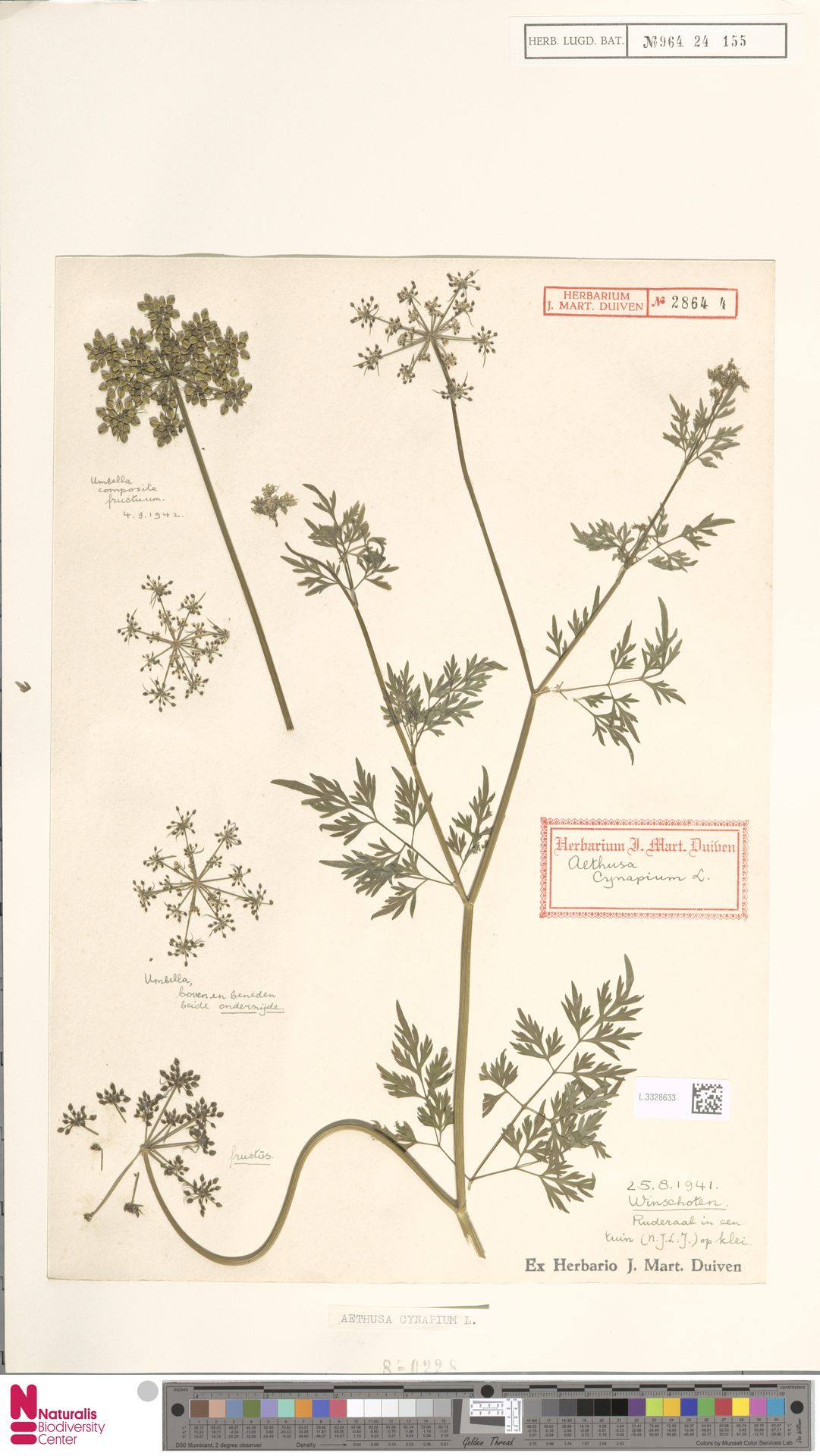 L.3328633 | Aethusa cynapium L.