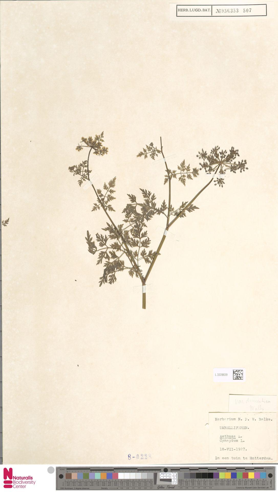 L.3328639 | Aethusa cynapium L.