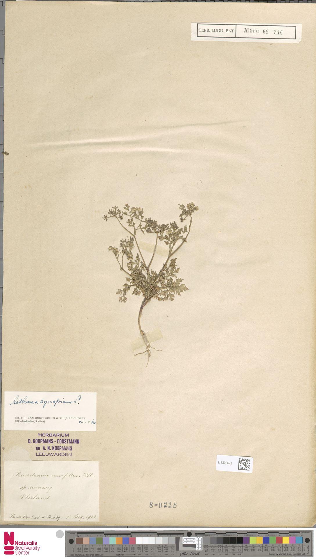 L.3328644 | Aethusa cynapium L.
