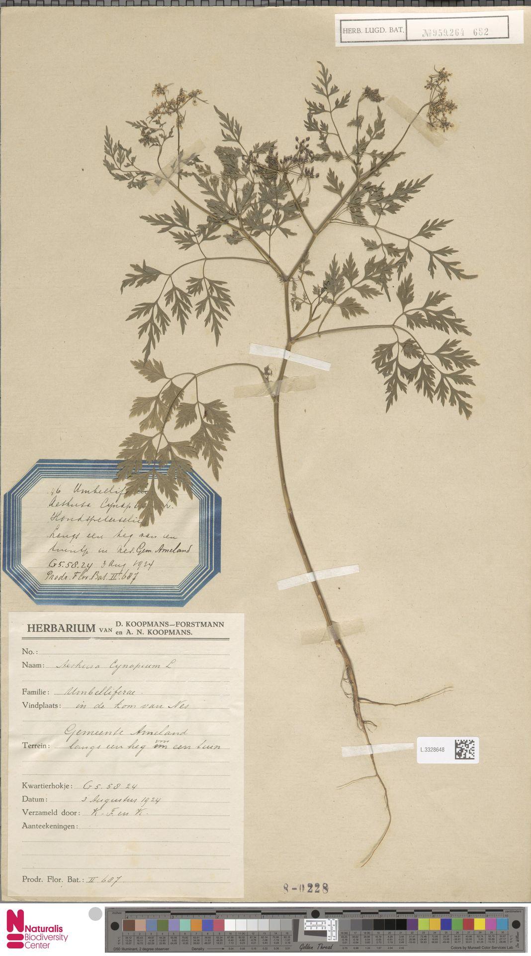 L.3328648 | Aethusa cynapium L.