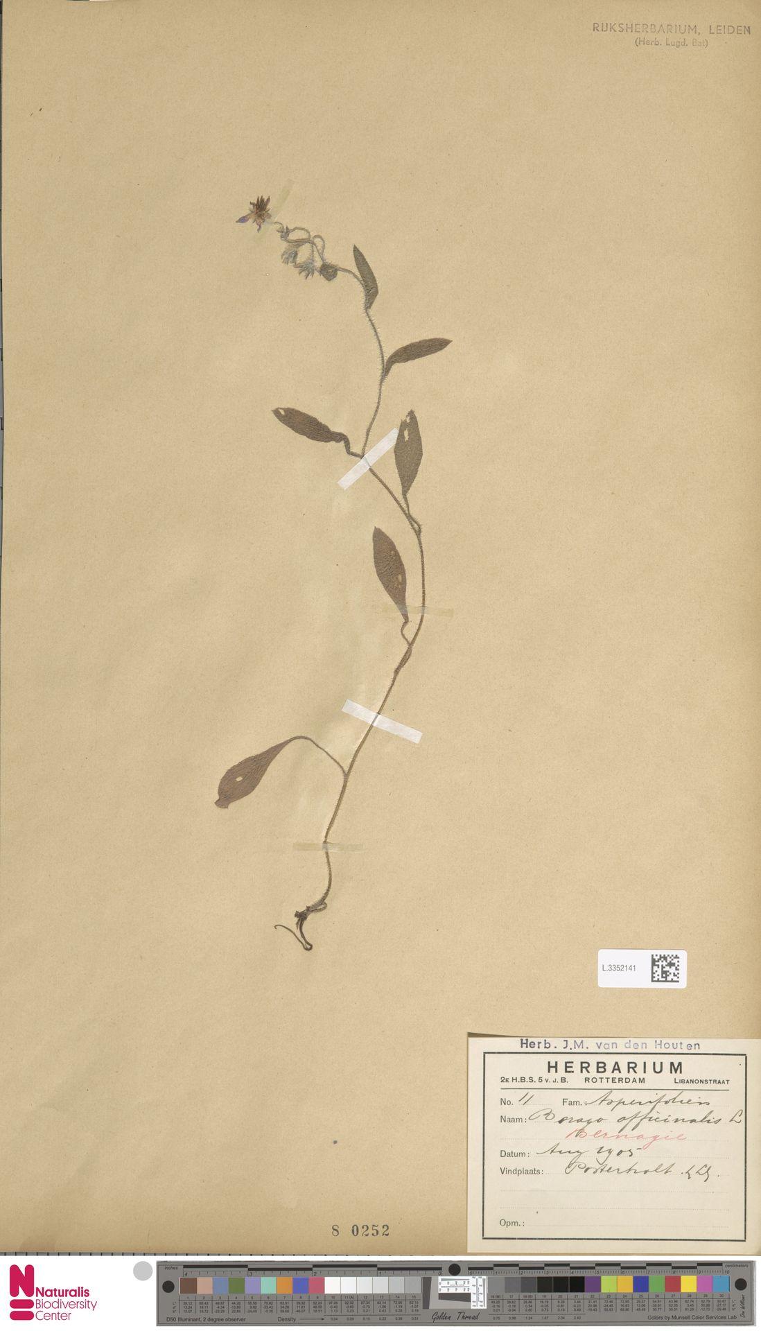 L.3352141 | Borago officinalis L.