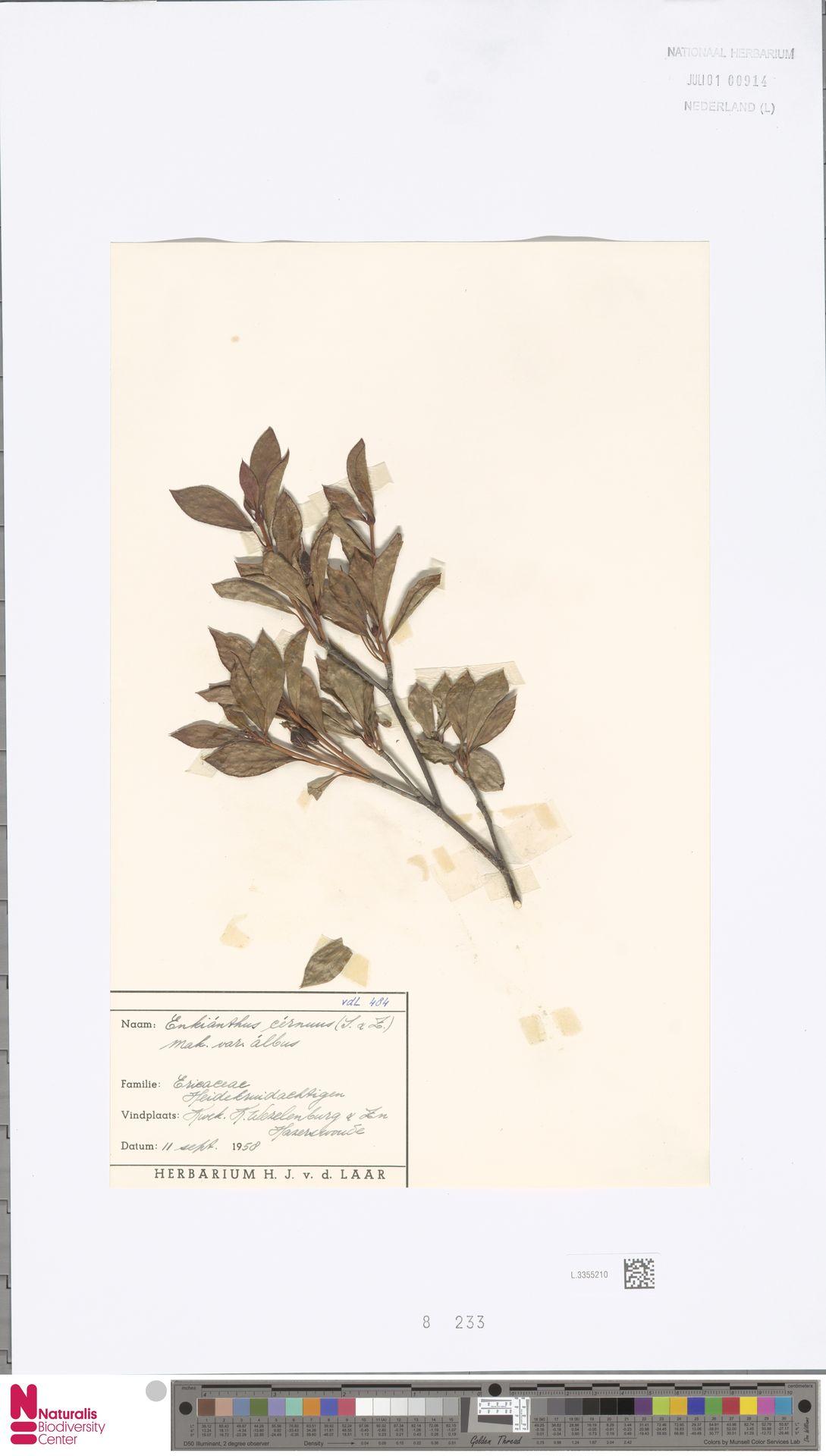L.3355210 | Enkianthus cernuus (Siebold & Zucc.) Makino