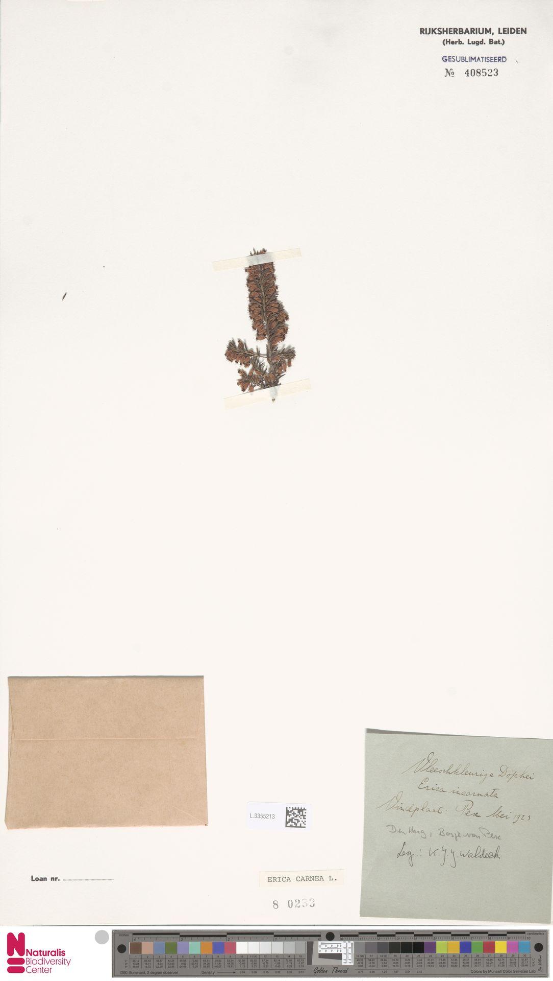 L.3355213 | Erica carnea L.