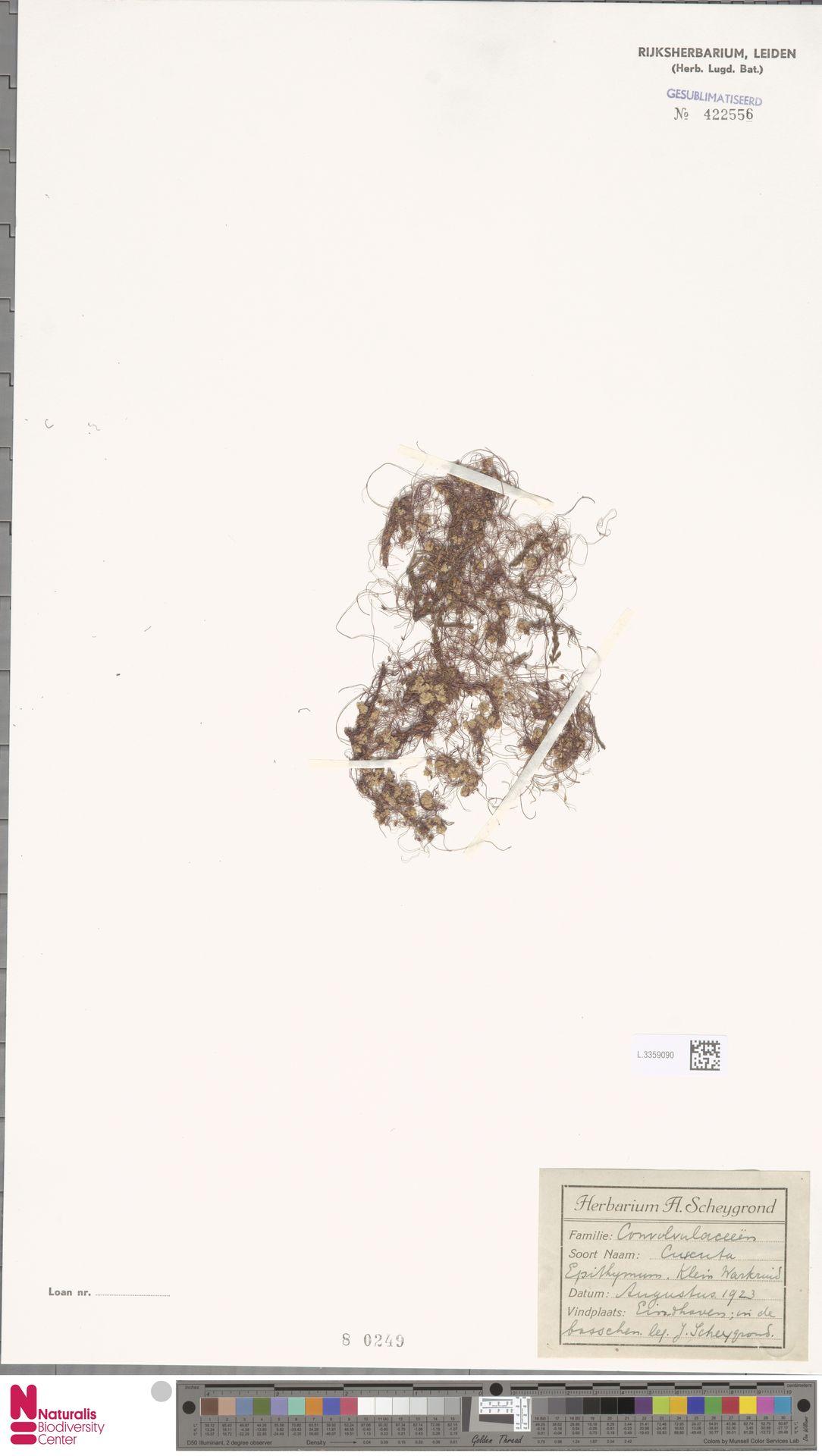 L.3359090 | Cuscuta epithymum (L.) L.