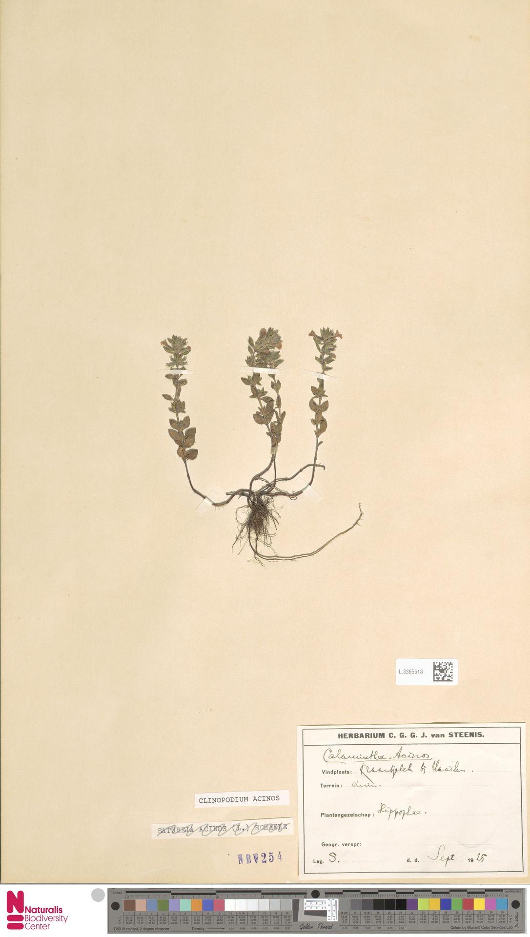 L.3365518 | Clinopodium acinos (L.) Kuntze