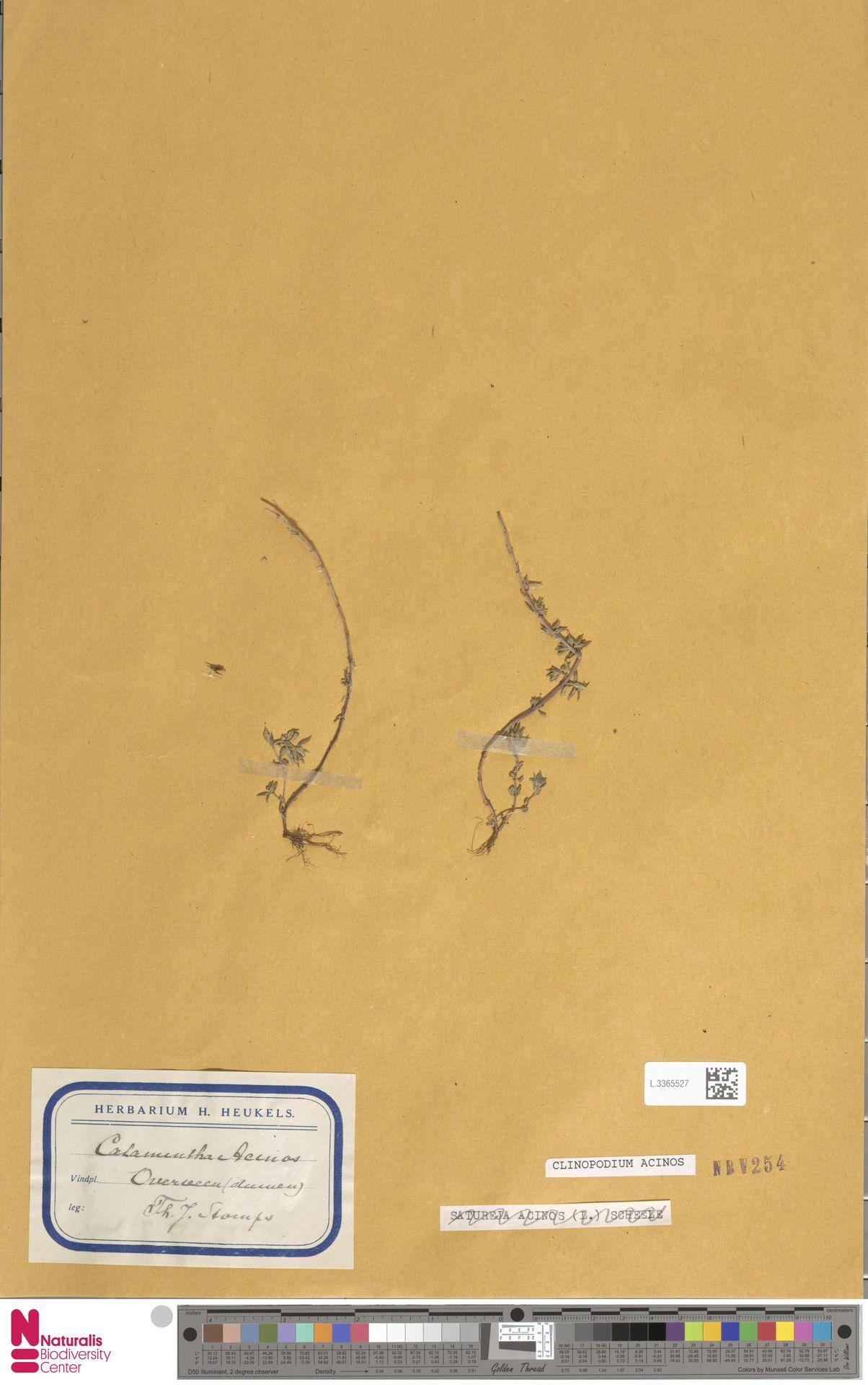 L.3365527 | Clinopodium acinos (L.) Kuntze