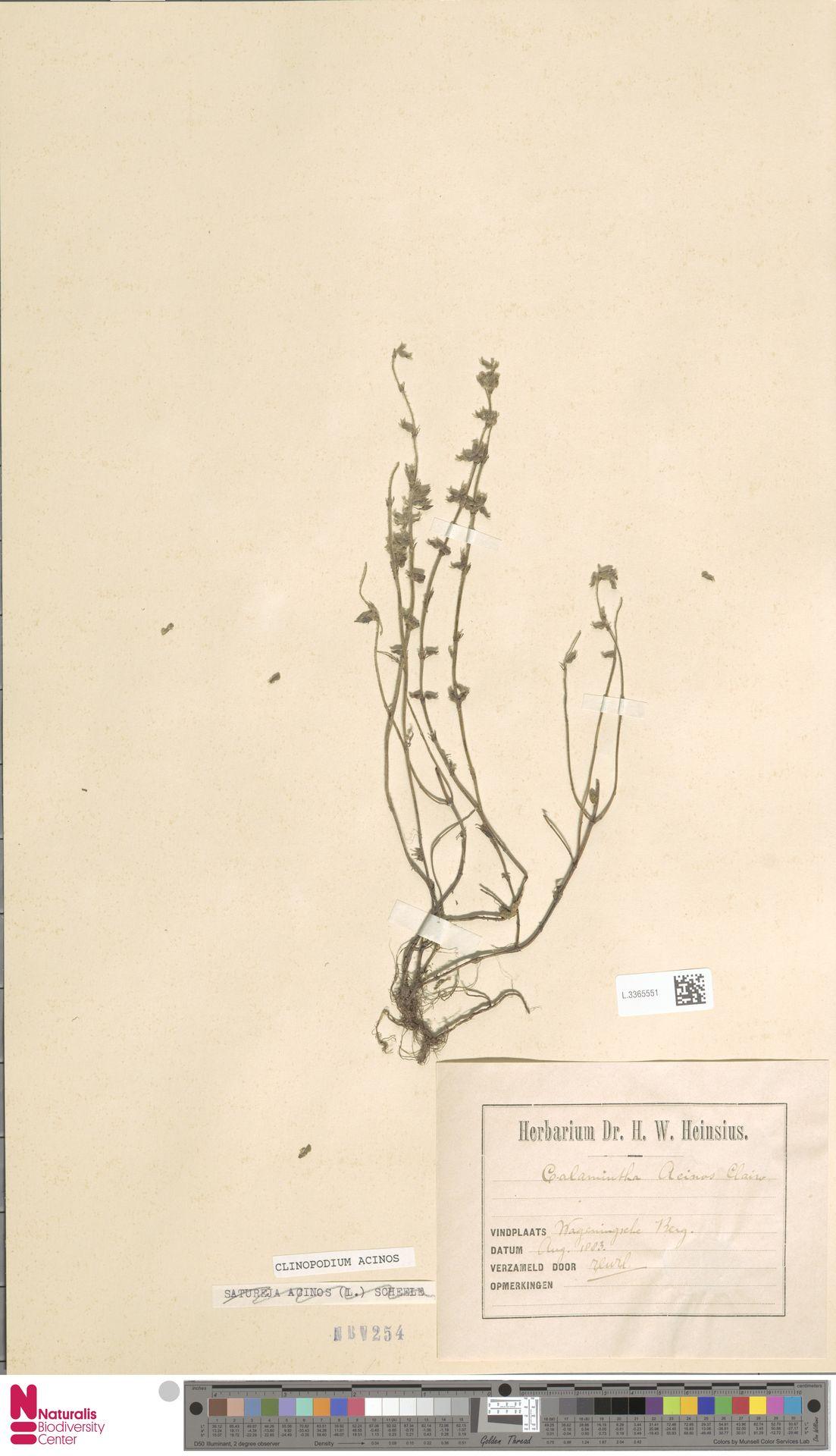 L.3365551 | Clinopodium acinos (L.) Kuntze