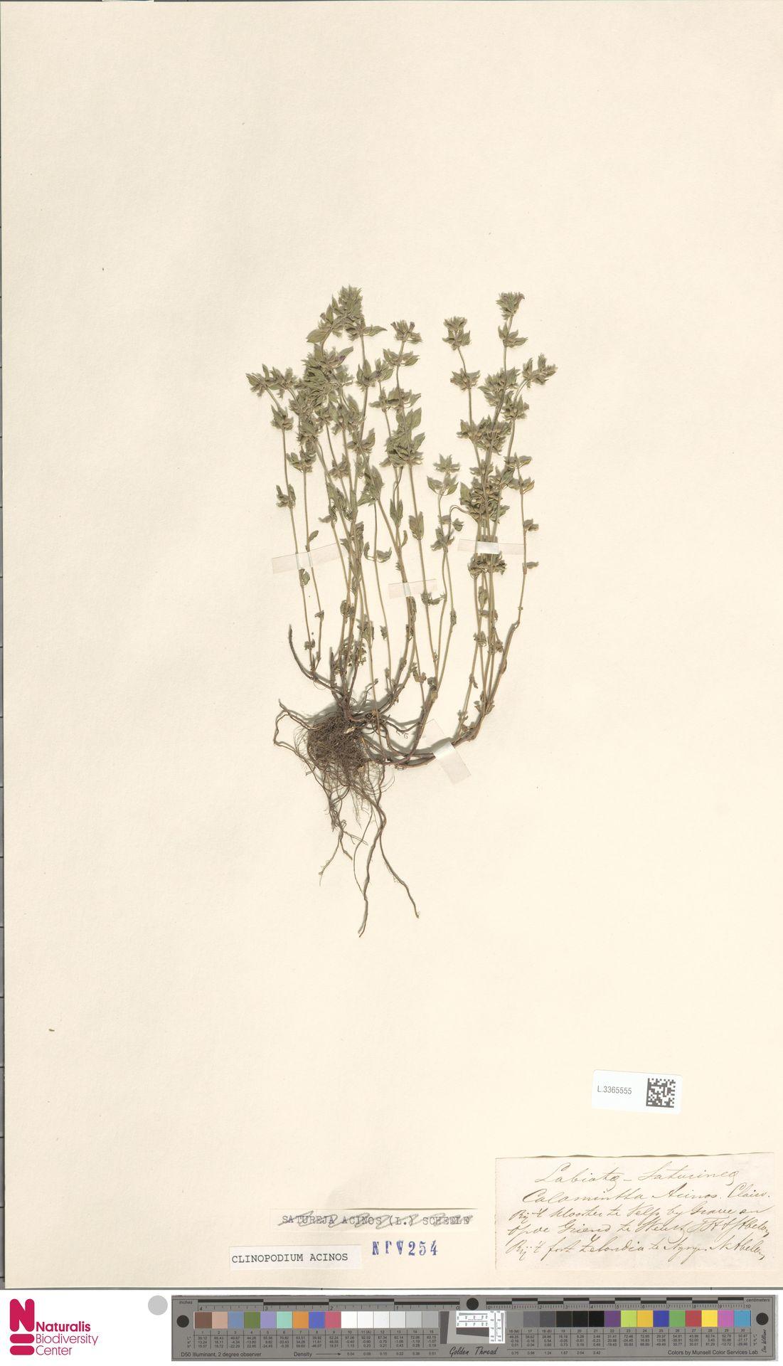 L.3365555   Clinopodium acinos (L.) Kuntze
