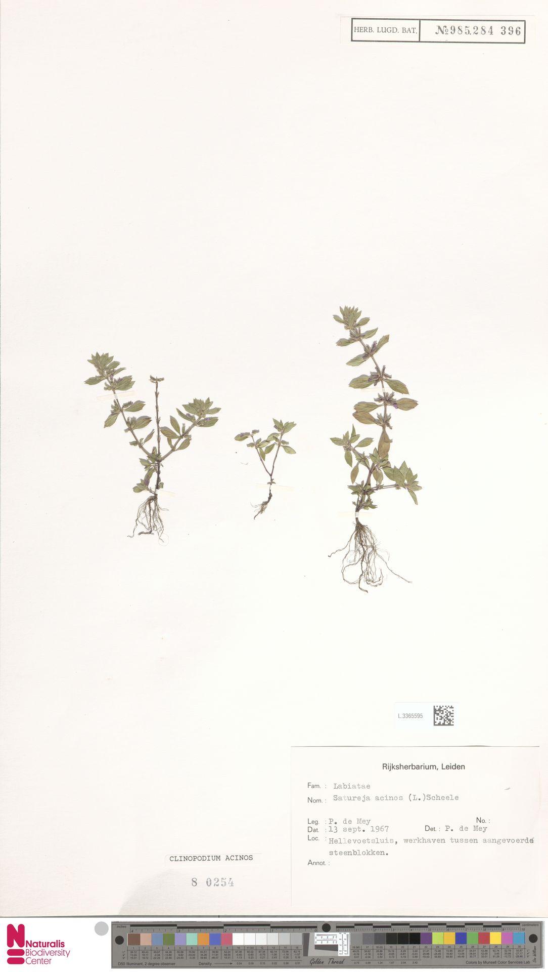 L.3365595 | Clinopodium acinos (L.) Kuntze
