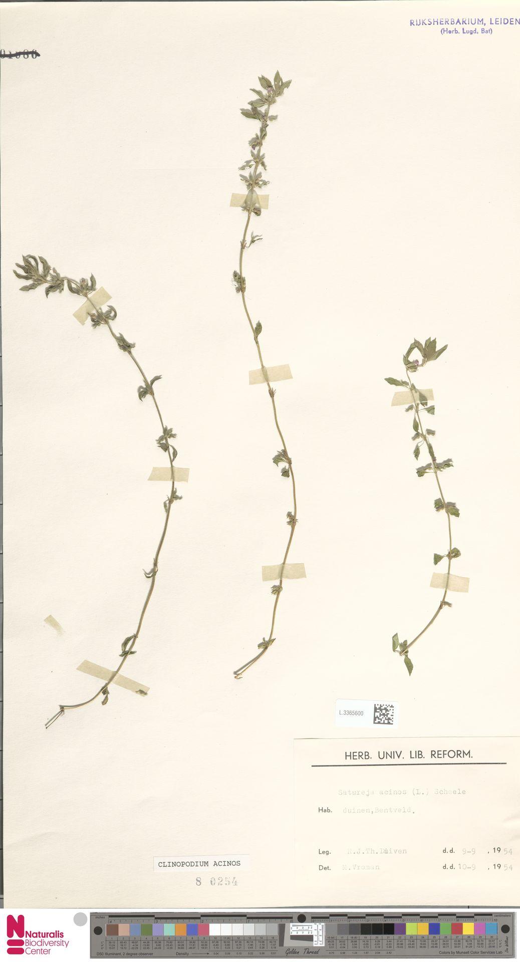 L.3365600   Clinopodium acinos (L.) Kuntze