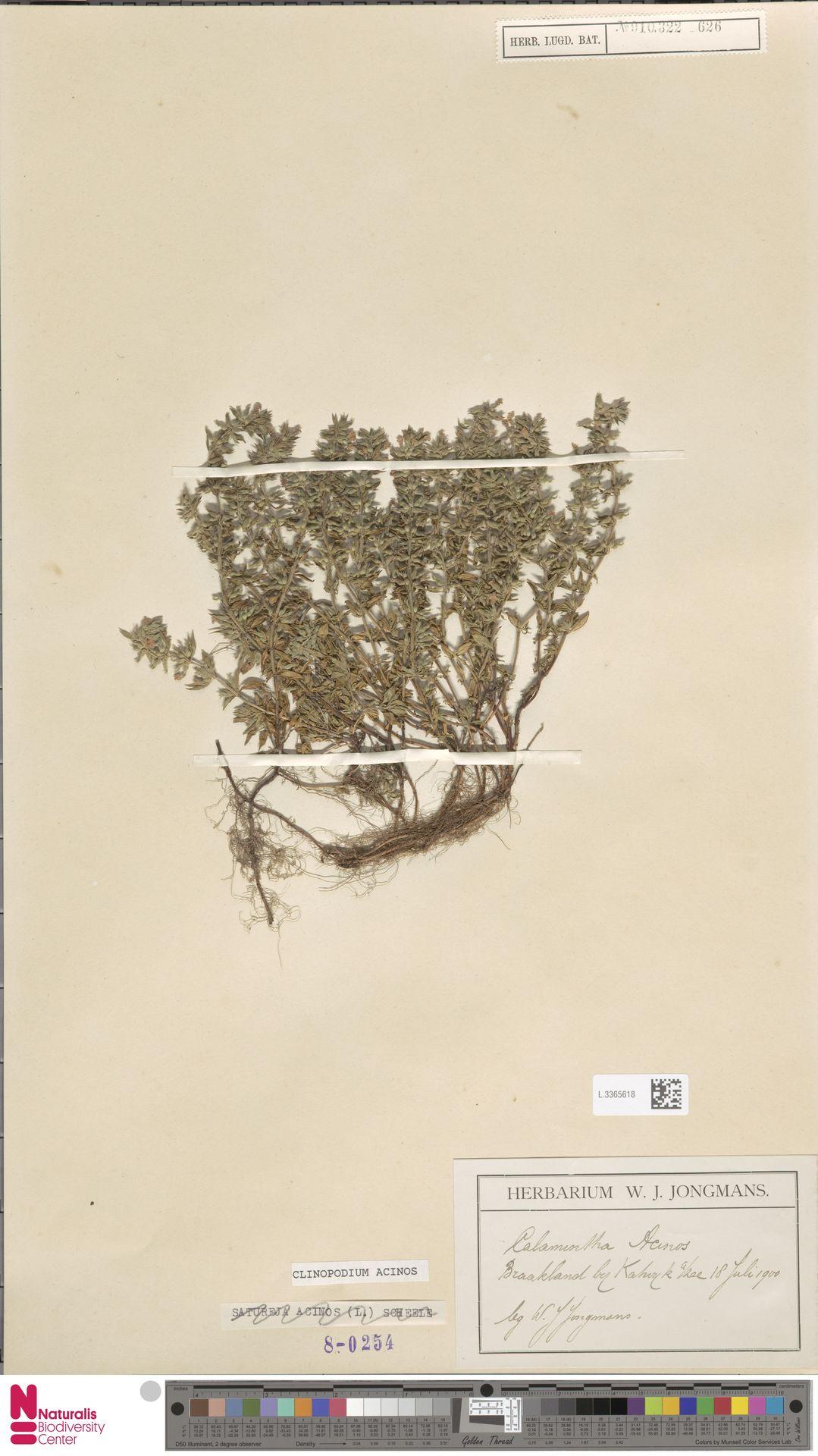 L.3365618 | Clinopodium acinos (L.) Kuntze
