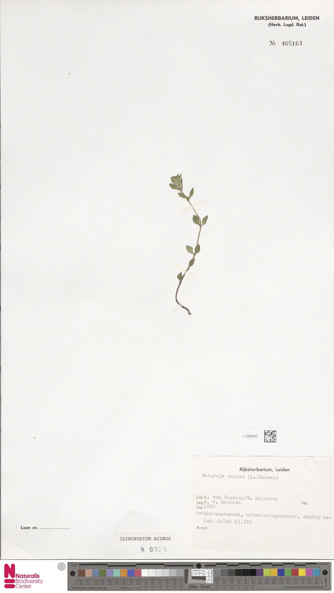 L.3365640 | Clinopodium acinos (L.) Kuntze