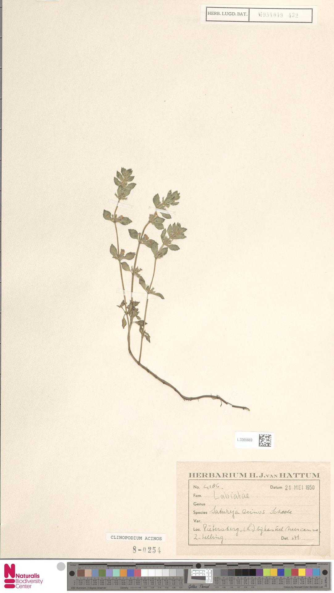 L.3365669   Clinopodium acinos (L.) Kuntze
