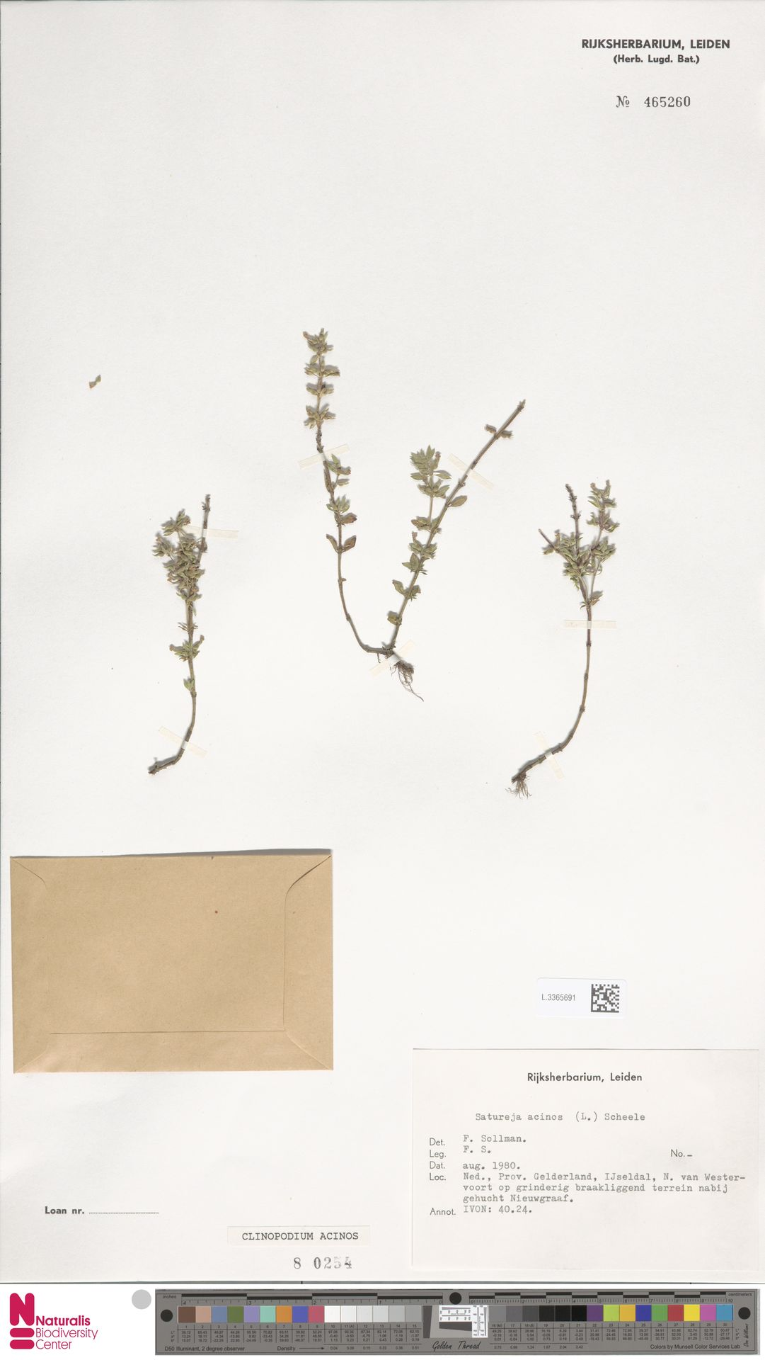L.3365691 | Clinopodium acinos (L.) Kuntze