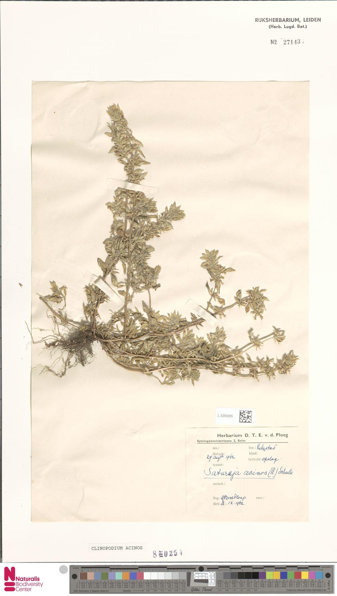 L.3365695 | Clinopodium acinos (L.) Kuntze